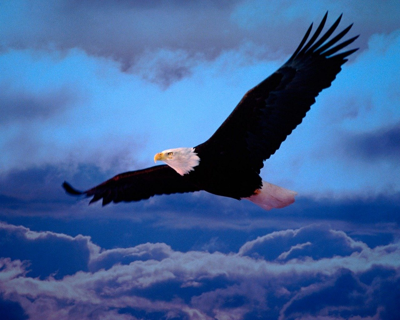 Download hd 1280x1024 American Bald Eagle desktop background ID:68701 for free
