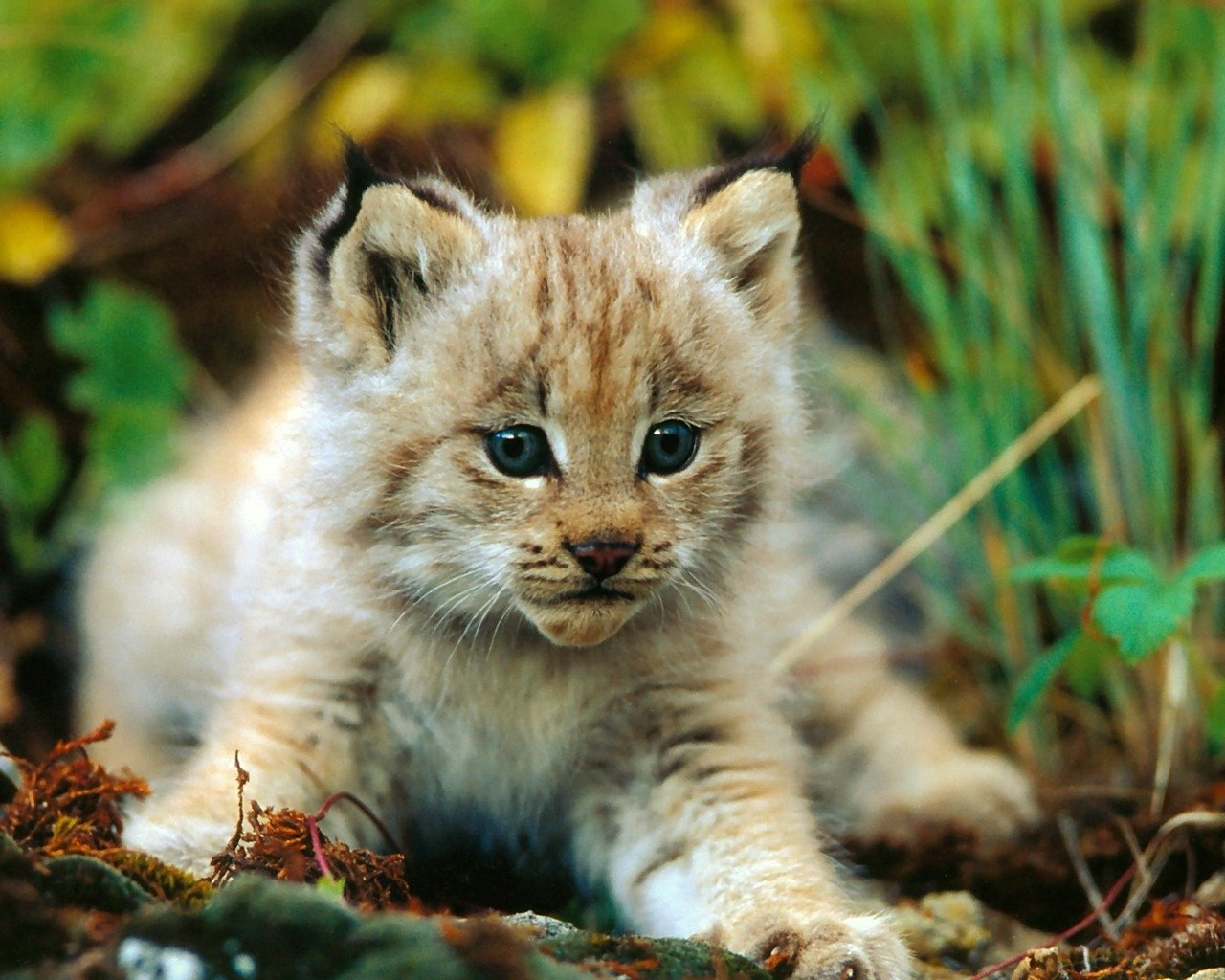 Awesome Baby Animal (cub) free wallpaper ID:422653 for hd 1280x1024 desktop