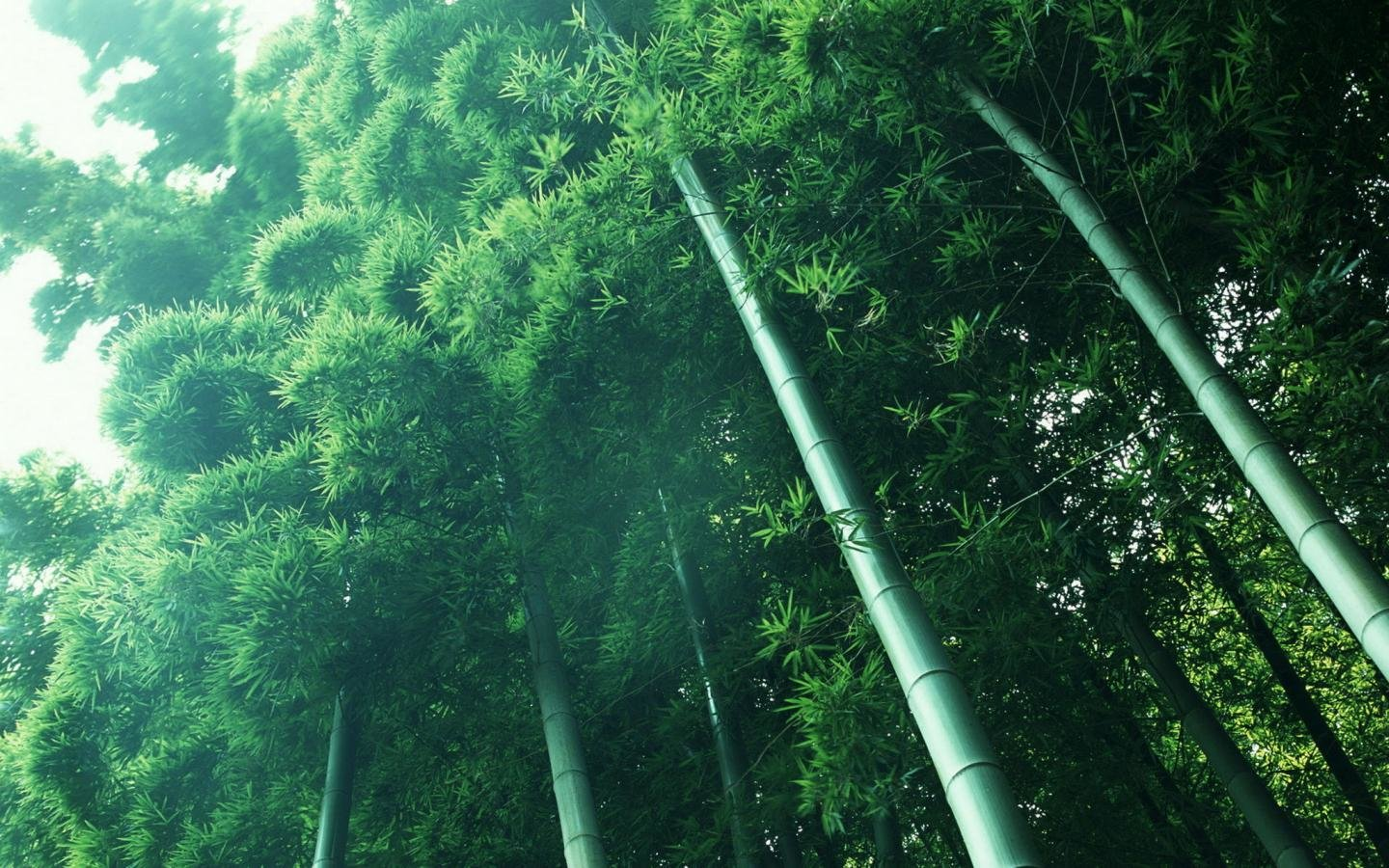 Awesome Bamboo free wallpaper ID:246835 for hd 1440x900 desktop