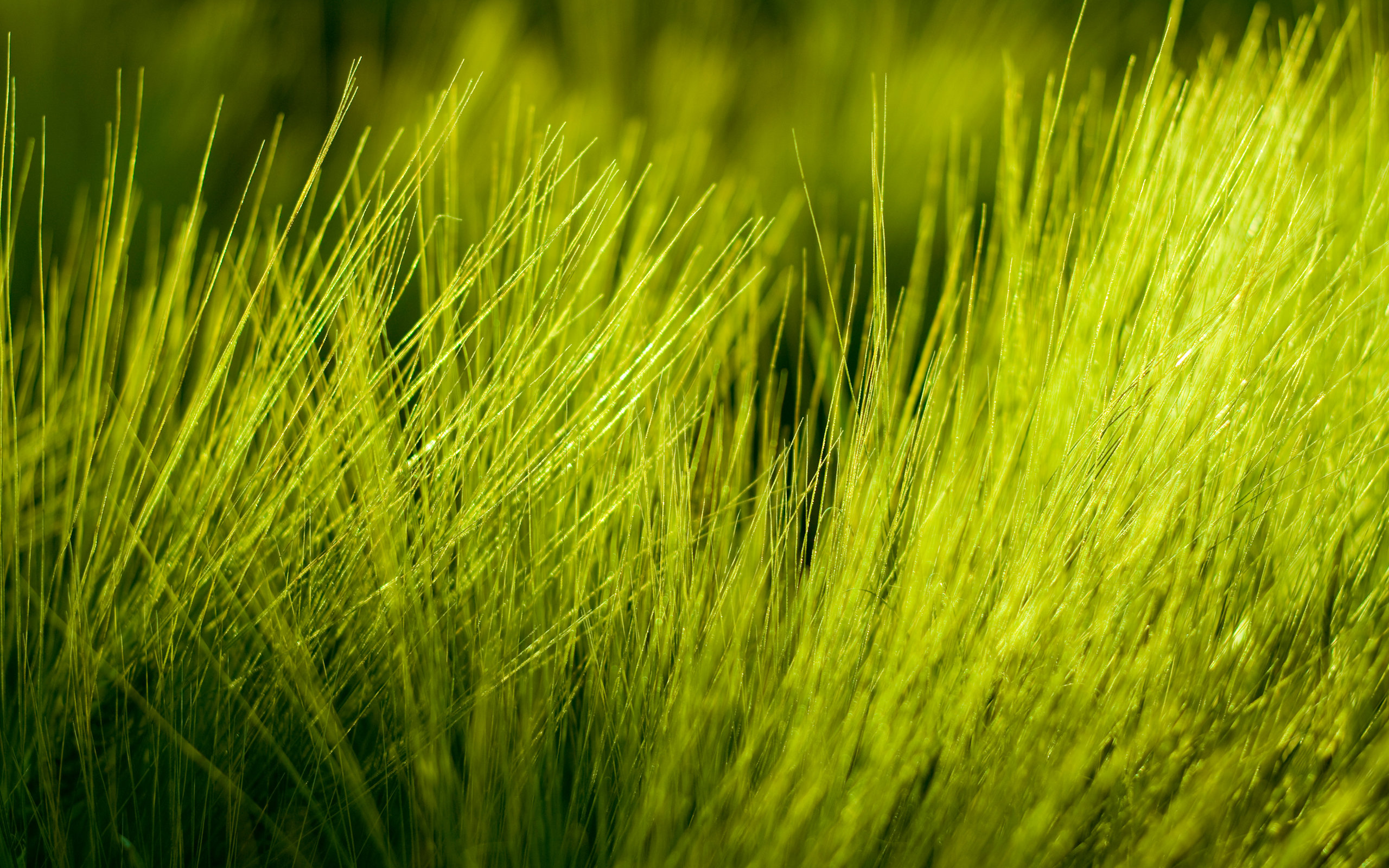 grass background hd landscape best grass background id377936 for high resolution hd 2560x1600 computer