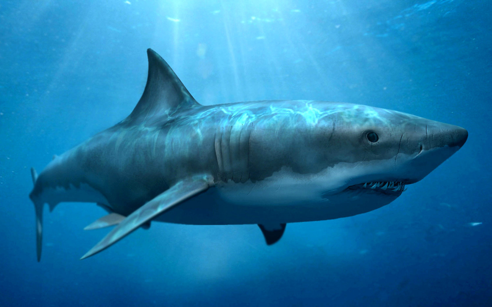 High resolution Shark hd 1680x1050 background ID:180659 for PC