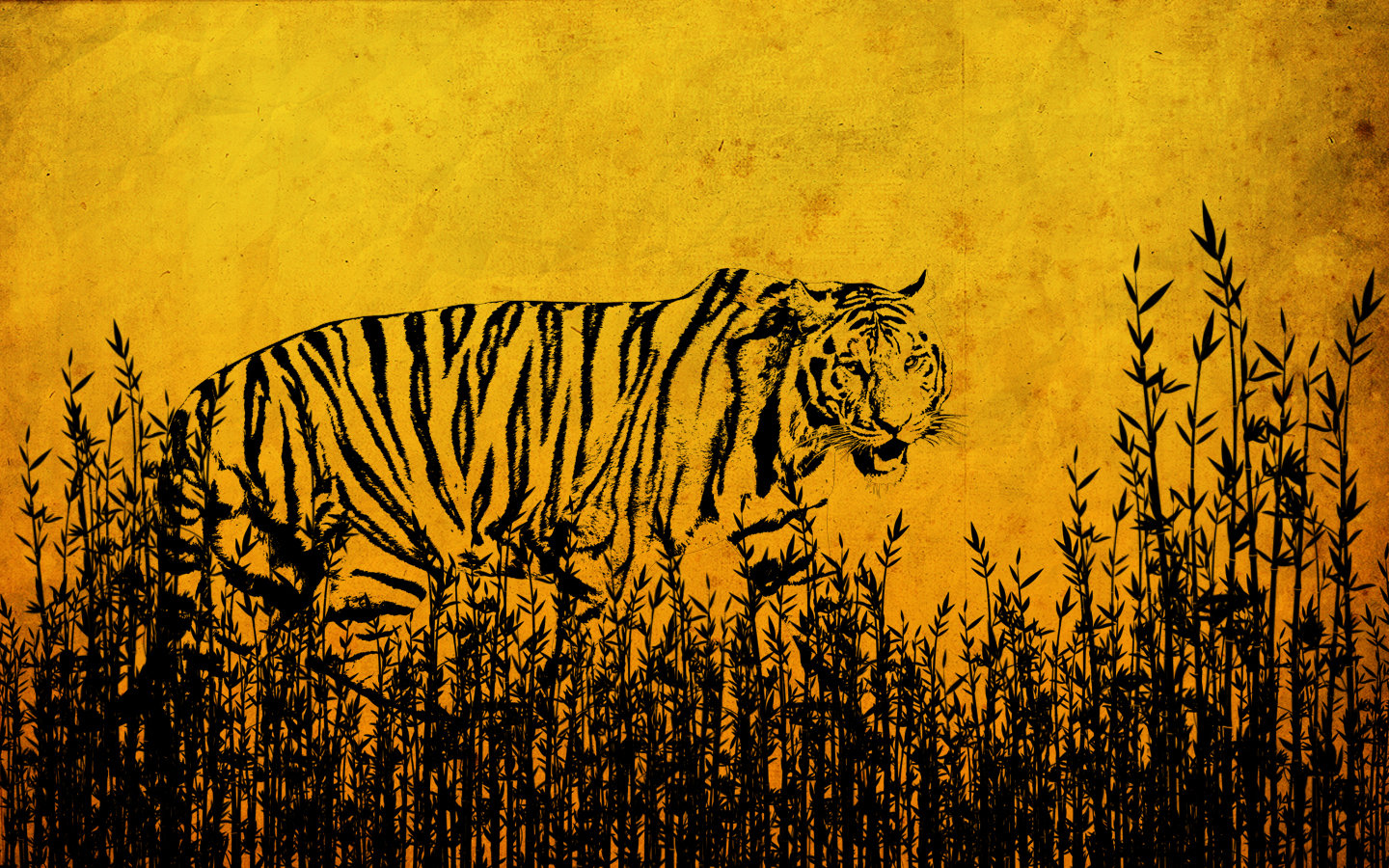 High resolution Tiger hd 1440x900 background ID:116665 for PC