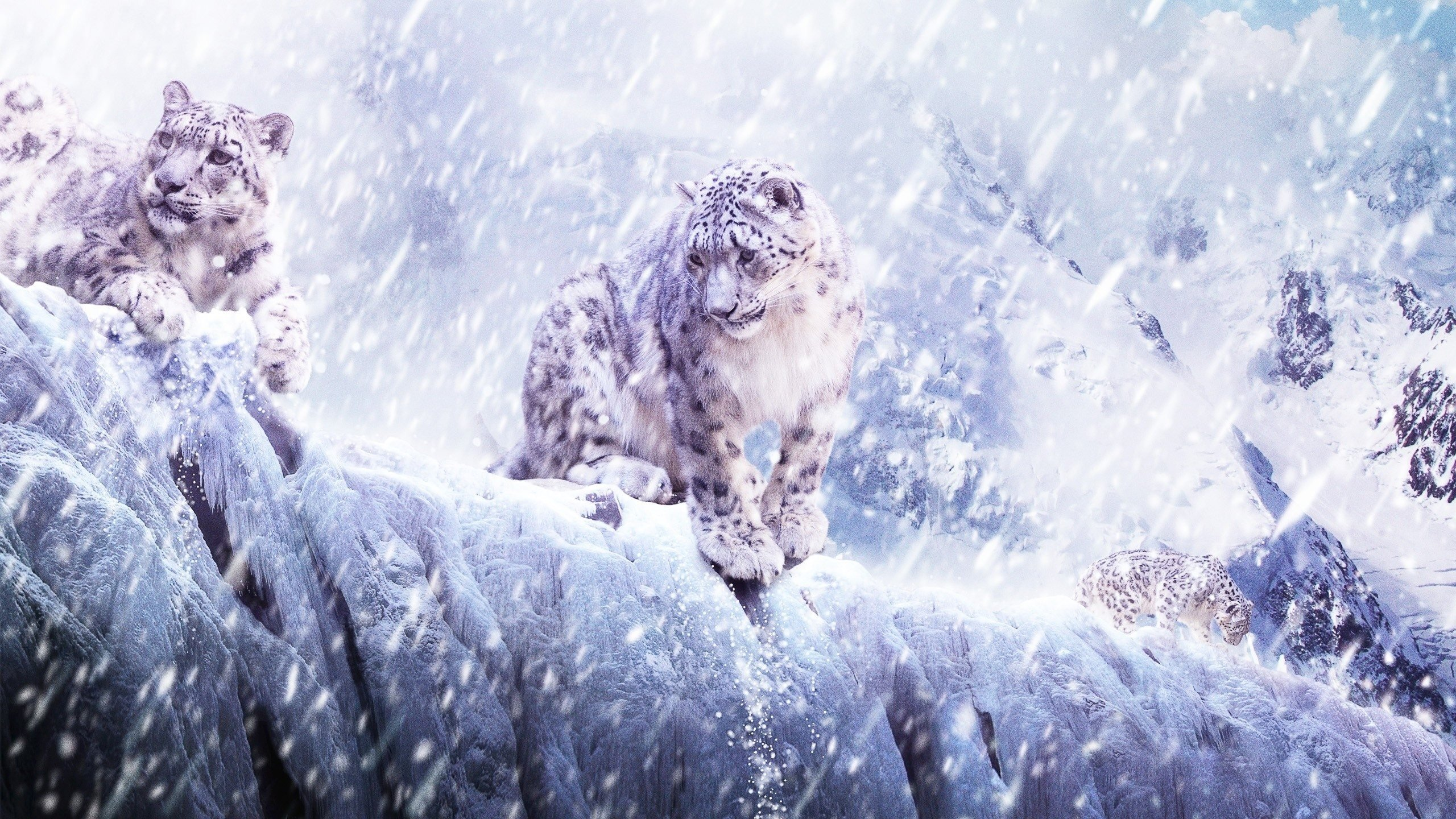 Best Snow Leopard background ID:34343 for High Resolution hd 2560x1440 computer