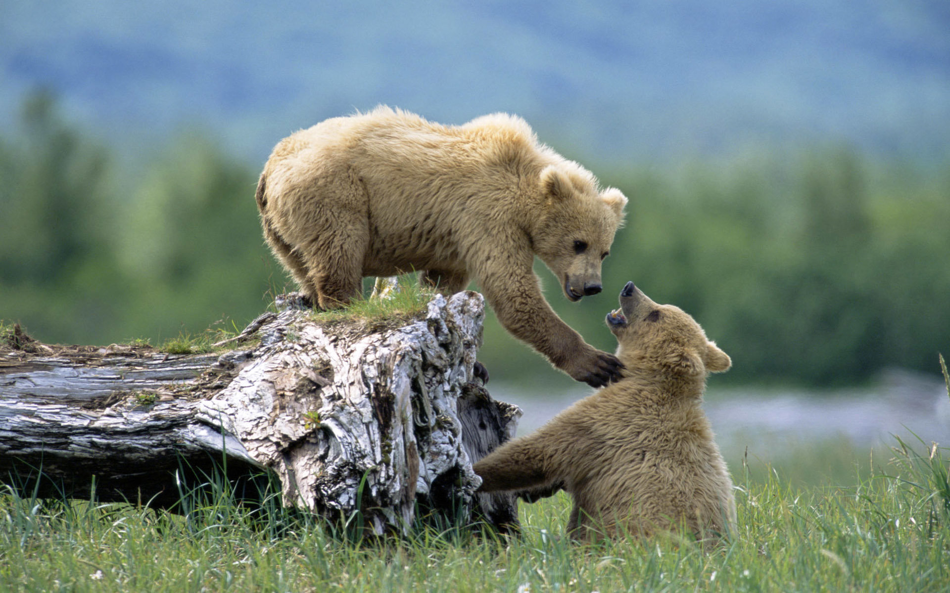 Best Baby Animal (cub) background ID:352867 for High Resolution hd 1920x1200 PC