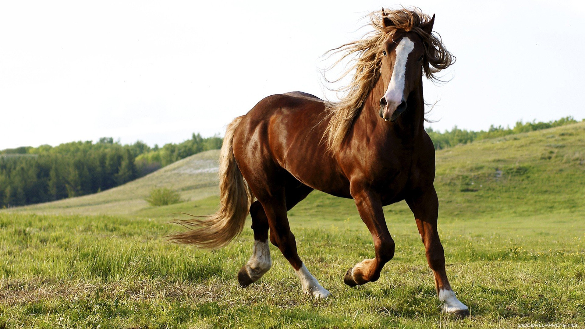Awesome Horse free background ID:24295 for hd 1920x1080 computer