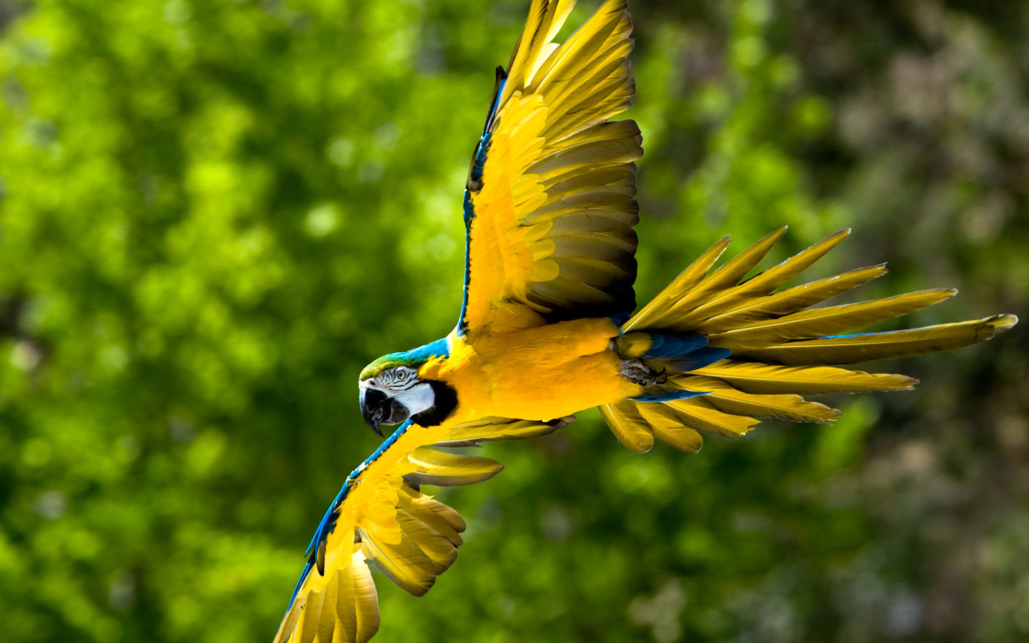 Free Macaw high quality background ID:46502 for hd 1440x900 desktop