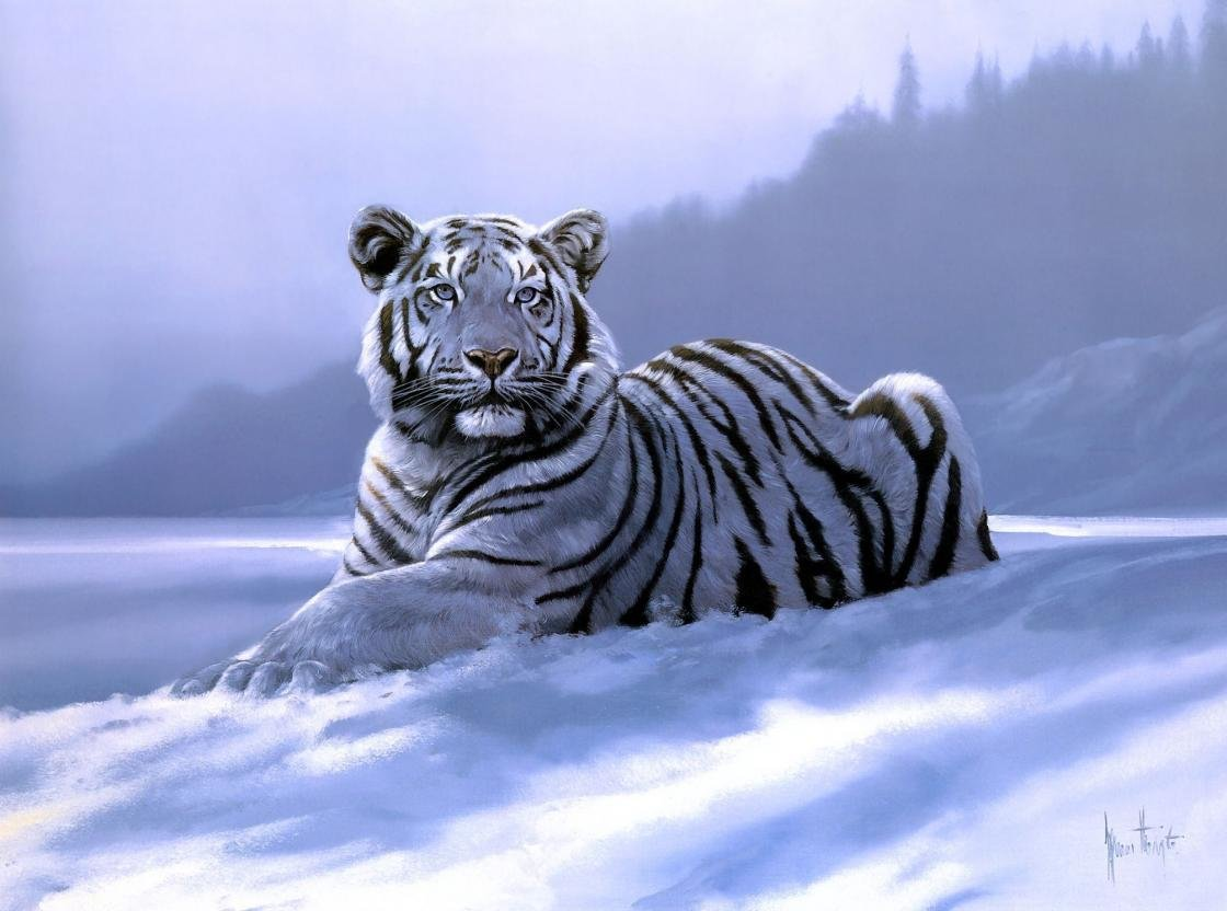 Free White Tiger high quality background ID:174843 for hd 1120x832 desktop