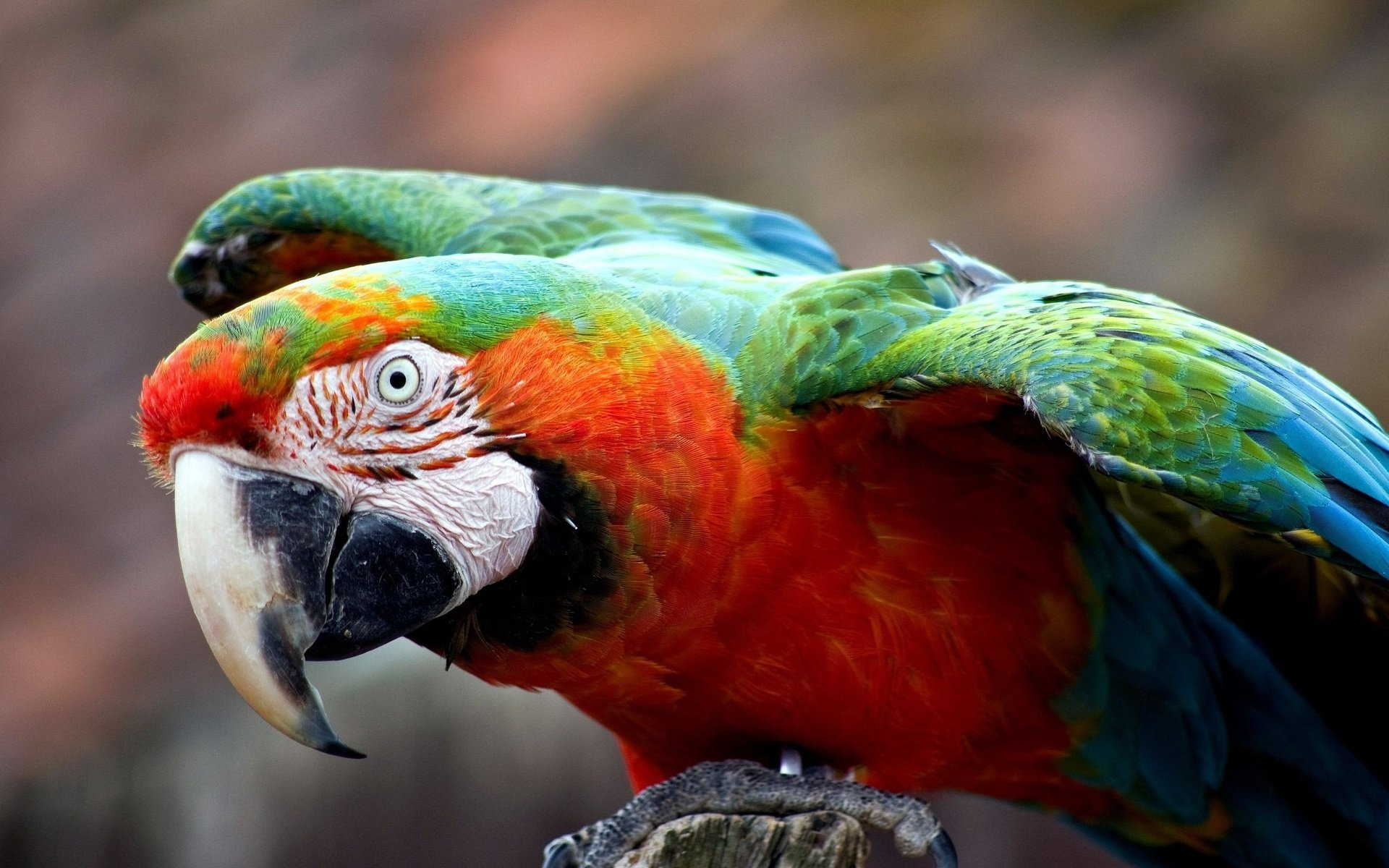 Best Macaw wallpaper ID:46270 for High Resolution hd 1920x1200 PC