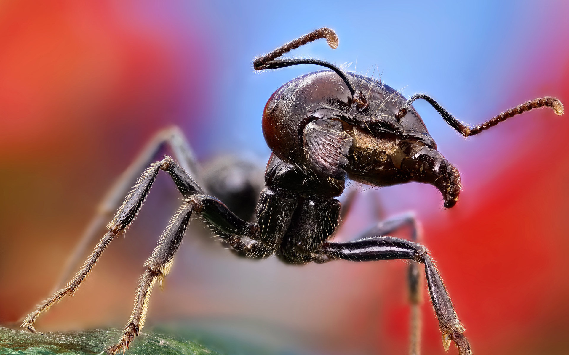 Free download Ant wallpaper ID:401326 hd 1920x1200 for PC