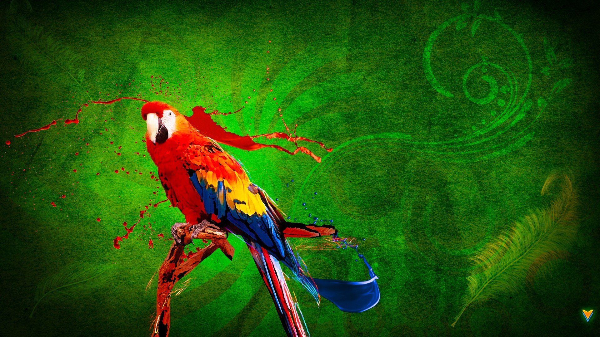High resolution Macaw full hd background ID:46413 for computer