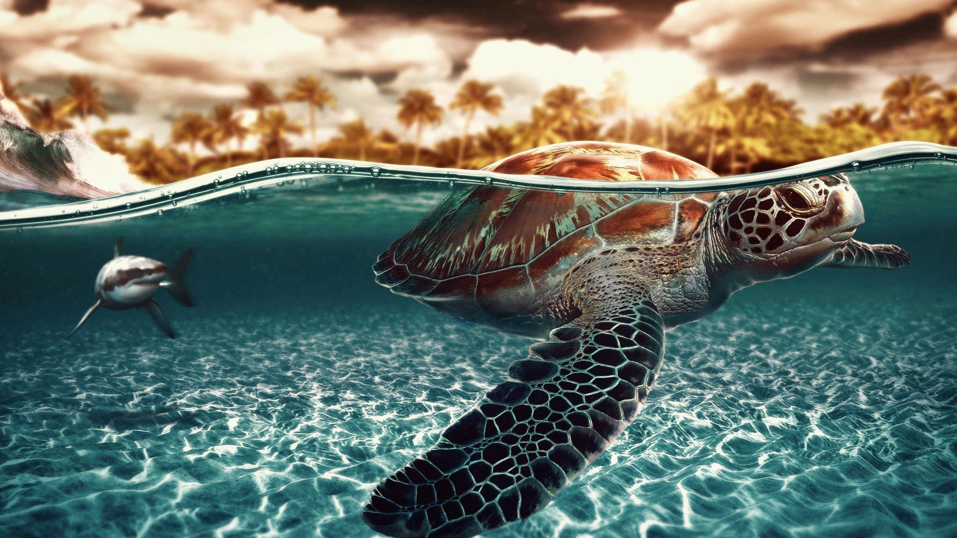 High resolution Turtle hd 1920x1080 wallpaper ID:29802 for desktop