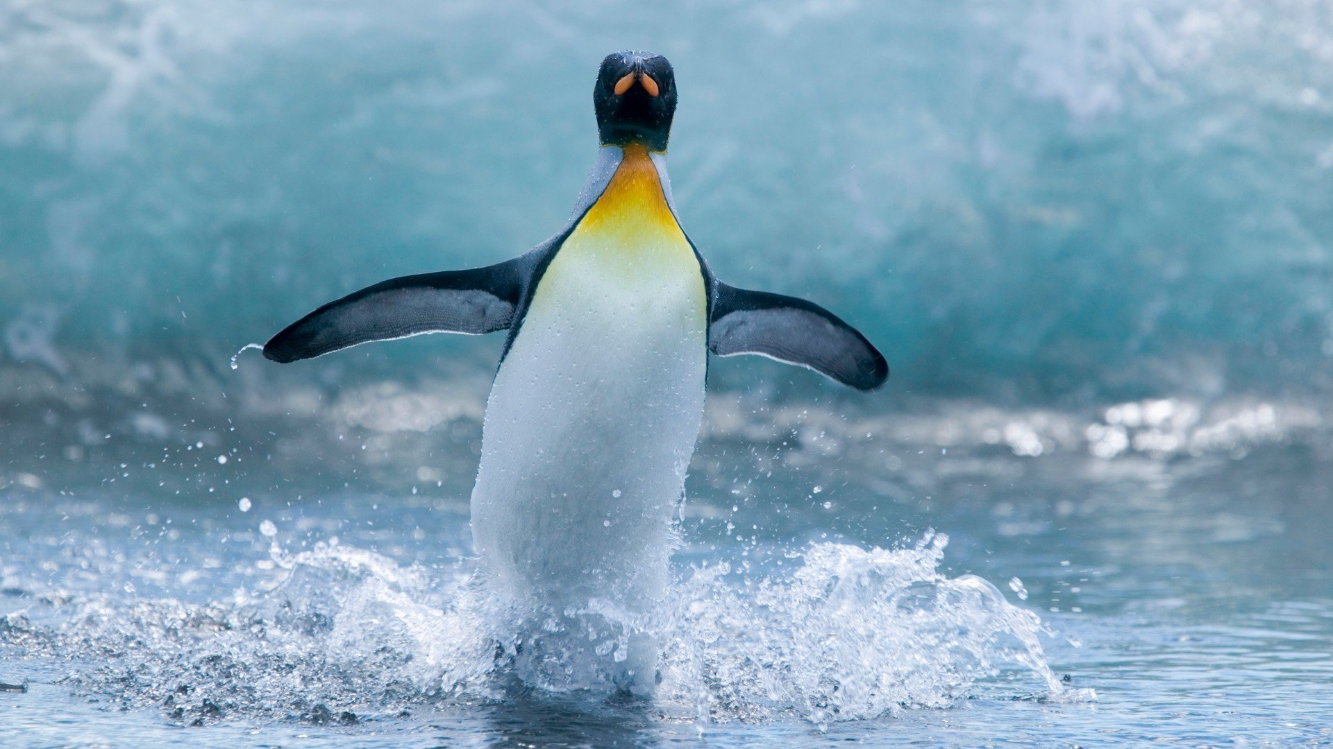 Awesome Penguin free background ID:149436 for hd 1080p computer
