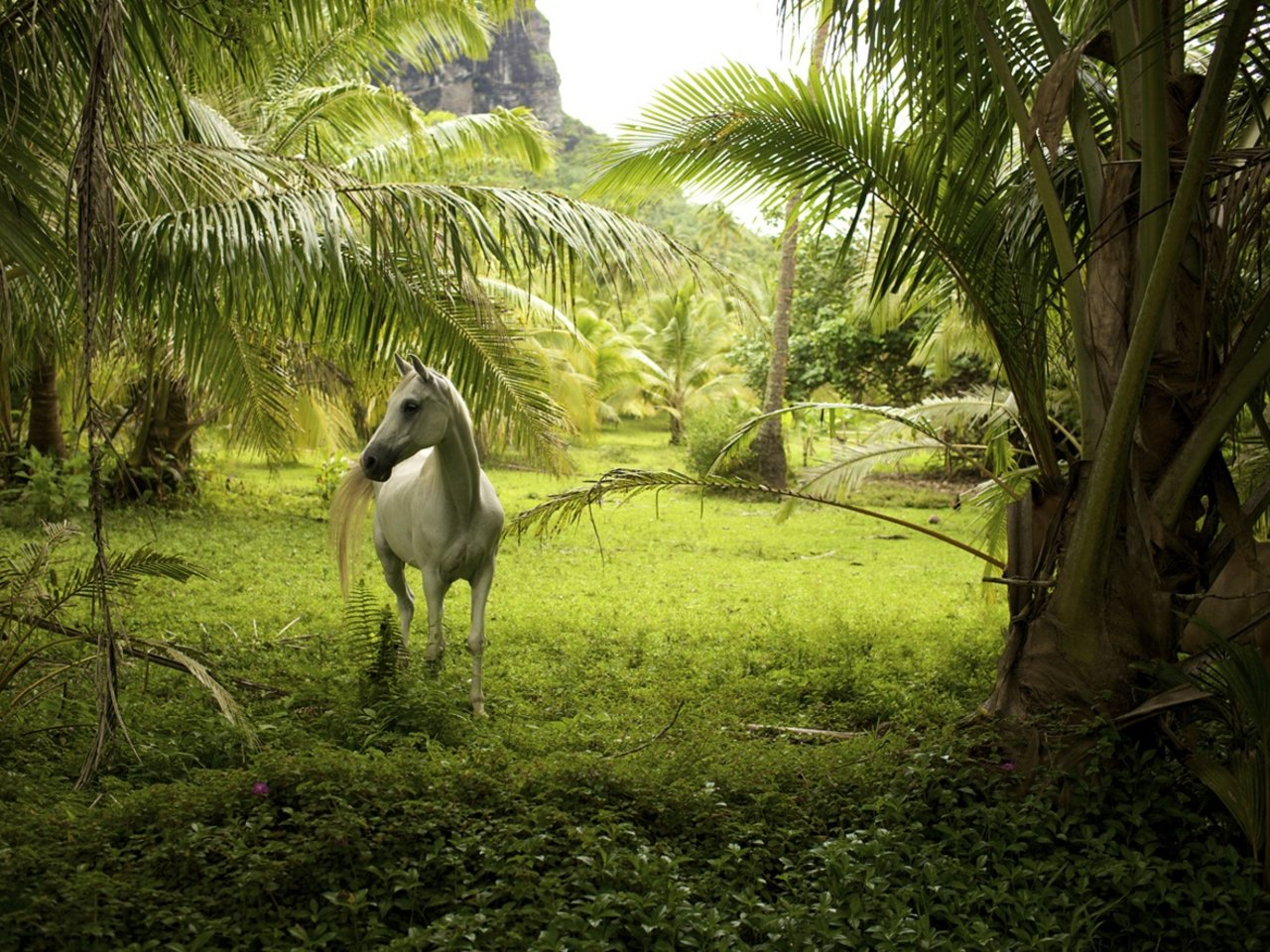 Awesome Horse free background ID:23788 for hd 1280x960 PC