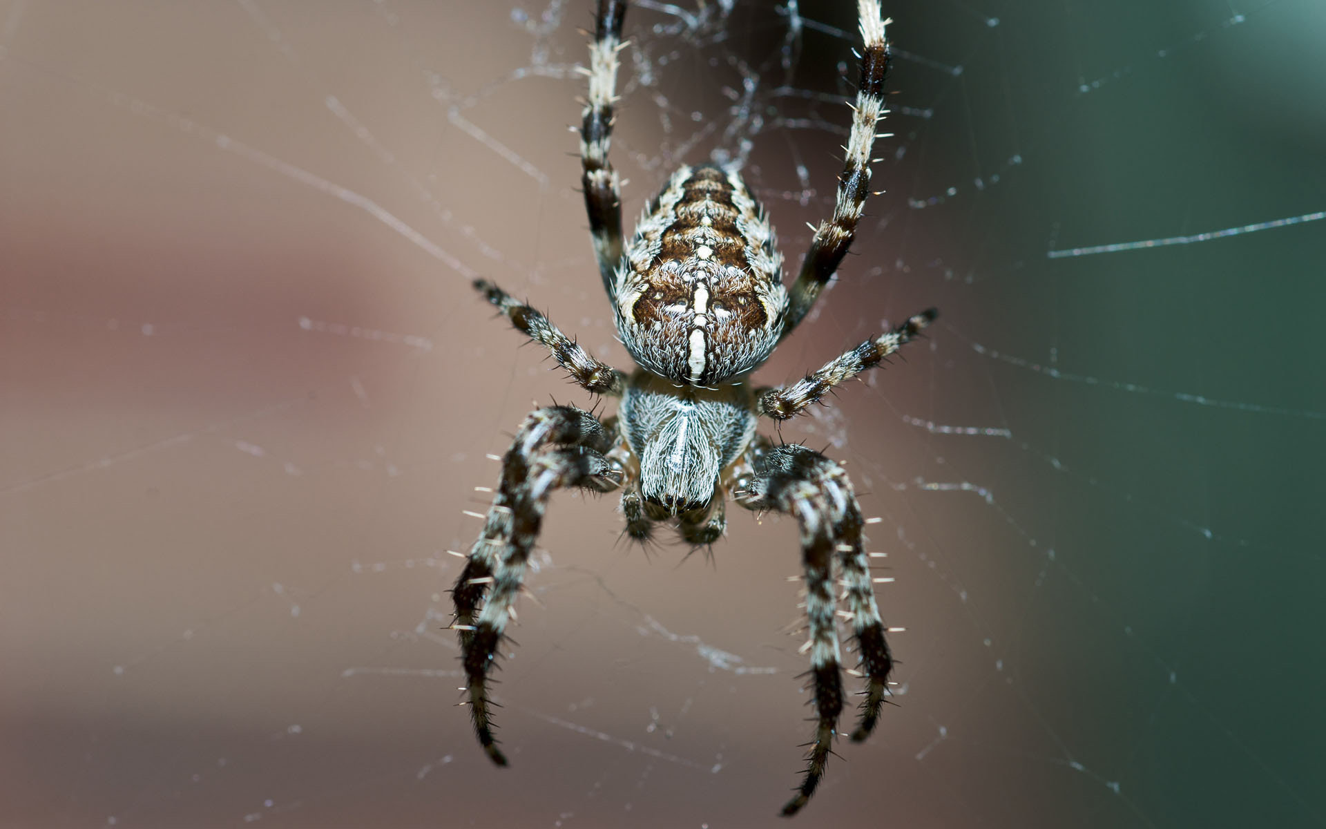 Best Spider wallpaper ID:22284 for High Resolution hd 1920x1200 computer
