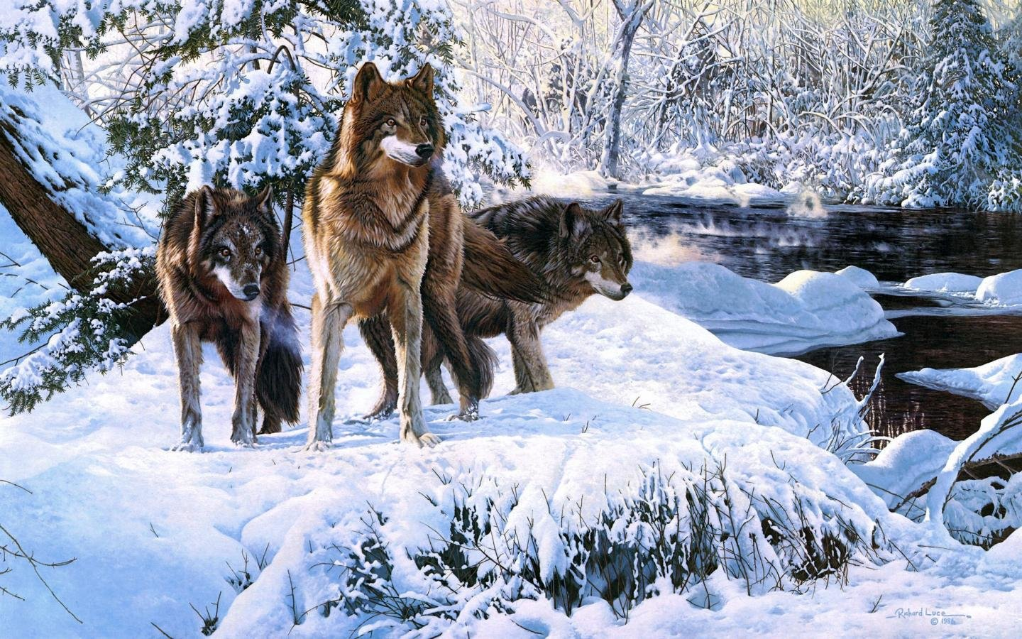 Best Wolf wallpaper ID:117638 for High Resolution hd 1440x900 PC
