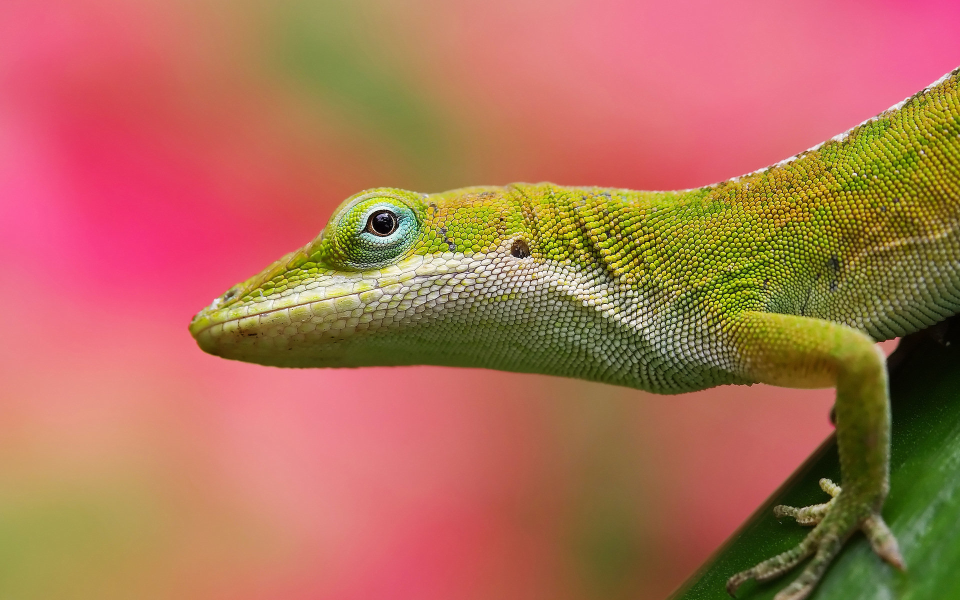 Best Lizard wallpaper ID:444119 for High Resolution hd 1920x1200 computer