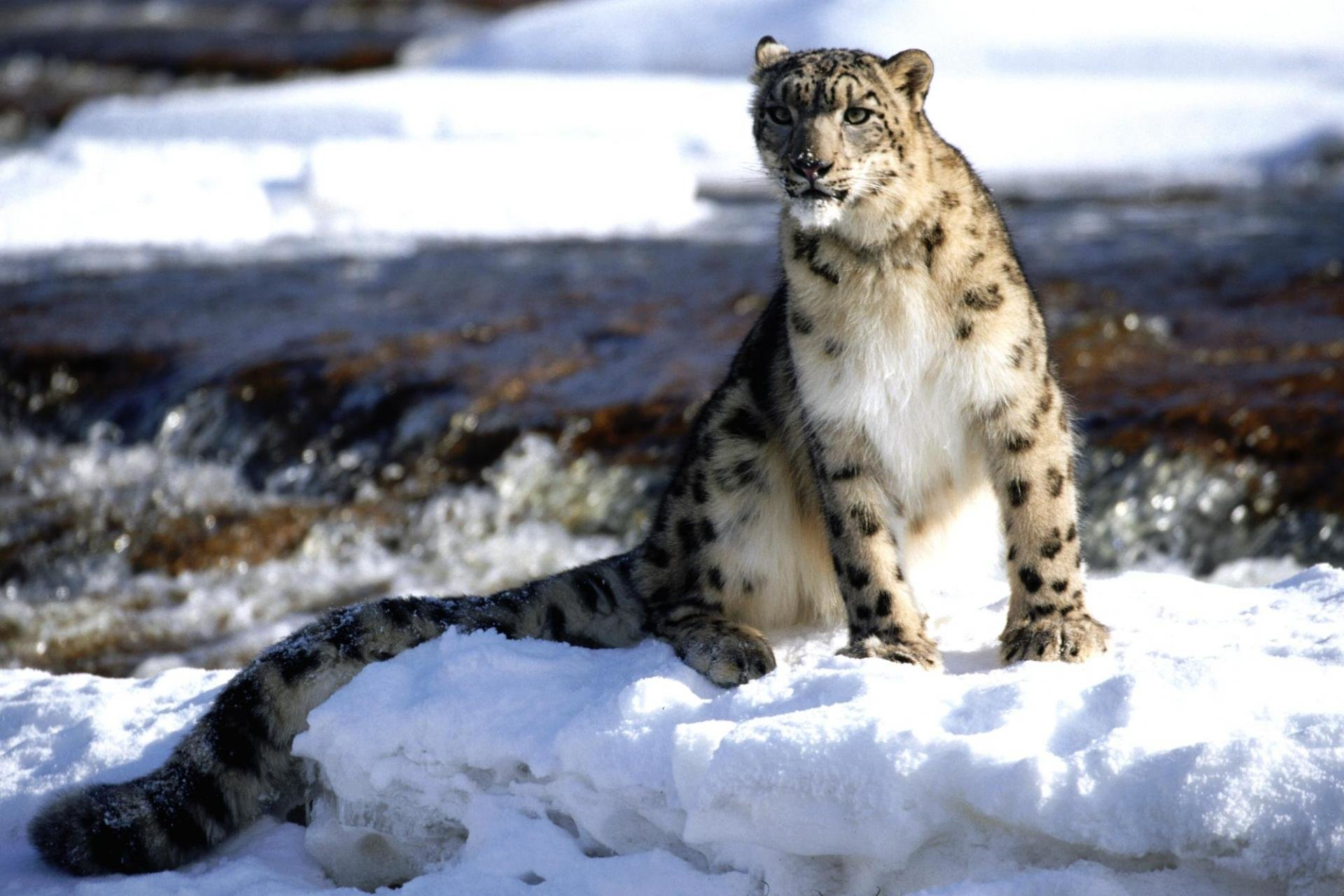 Download hd 1920x1280 Snow Leopard PC wallpaper ID:34527 for free