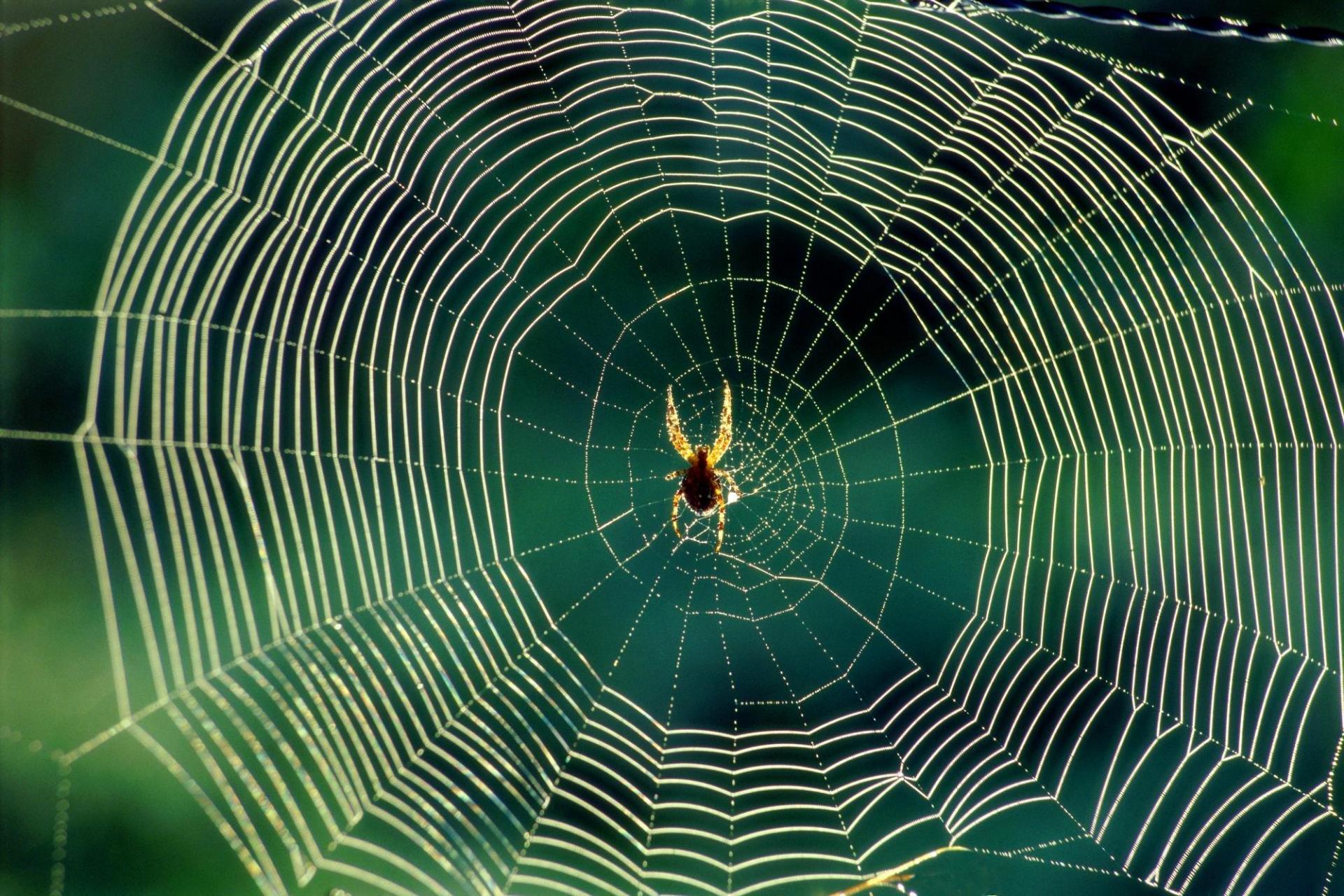 Spider Web wallpaper ID:184768 hd