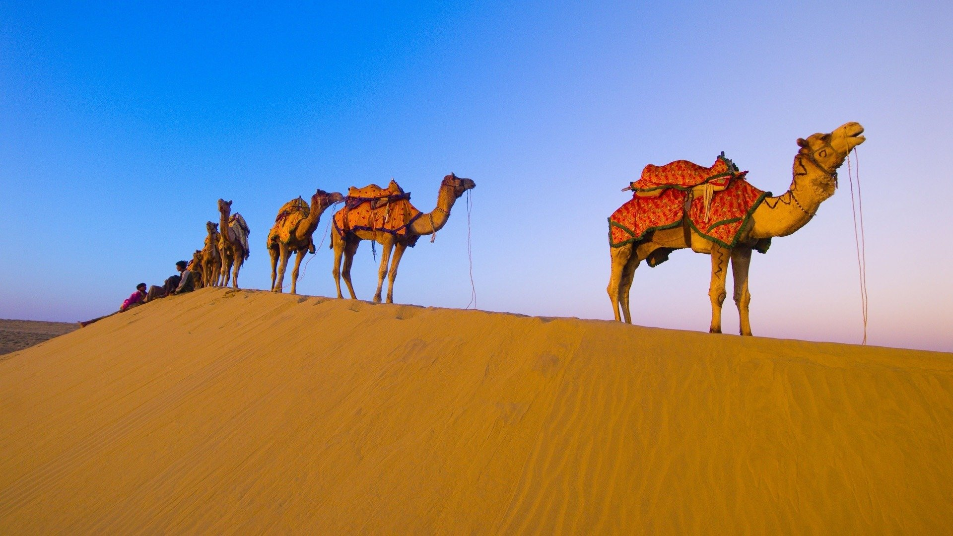 Best Camel background ID:123423 for High Resolution hd 1920x1080 PC