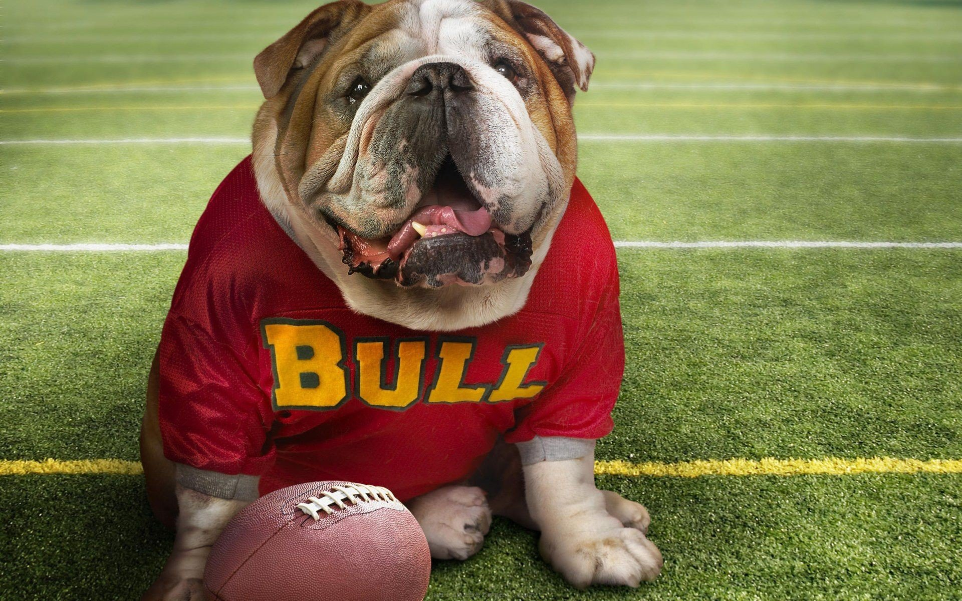 Free download Georgia Bulldogs background ID:70228 hd 1920x1200 for PC