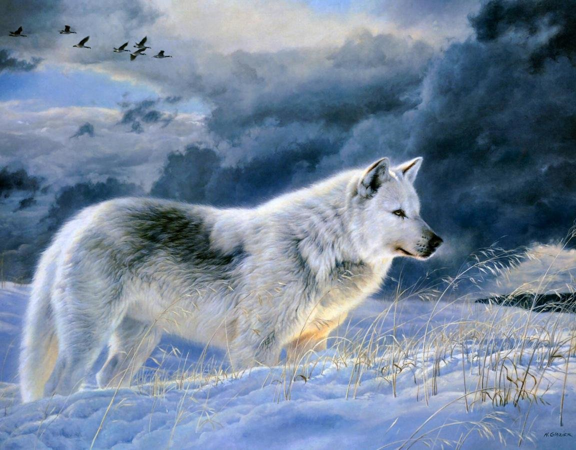 Download hd 1152x900 Wolf desktop background ID:117973 for free