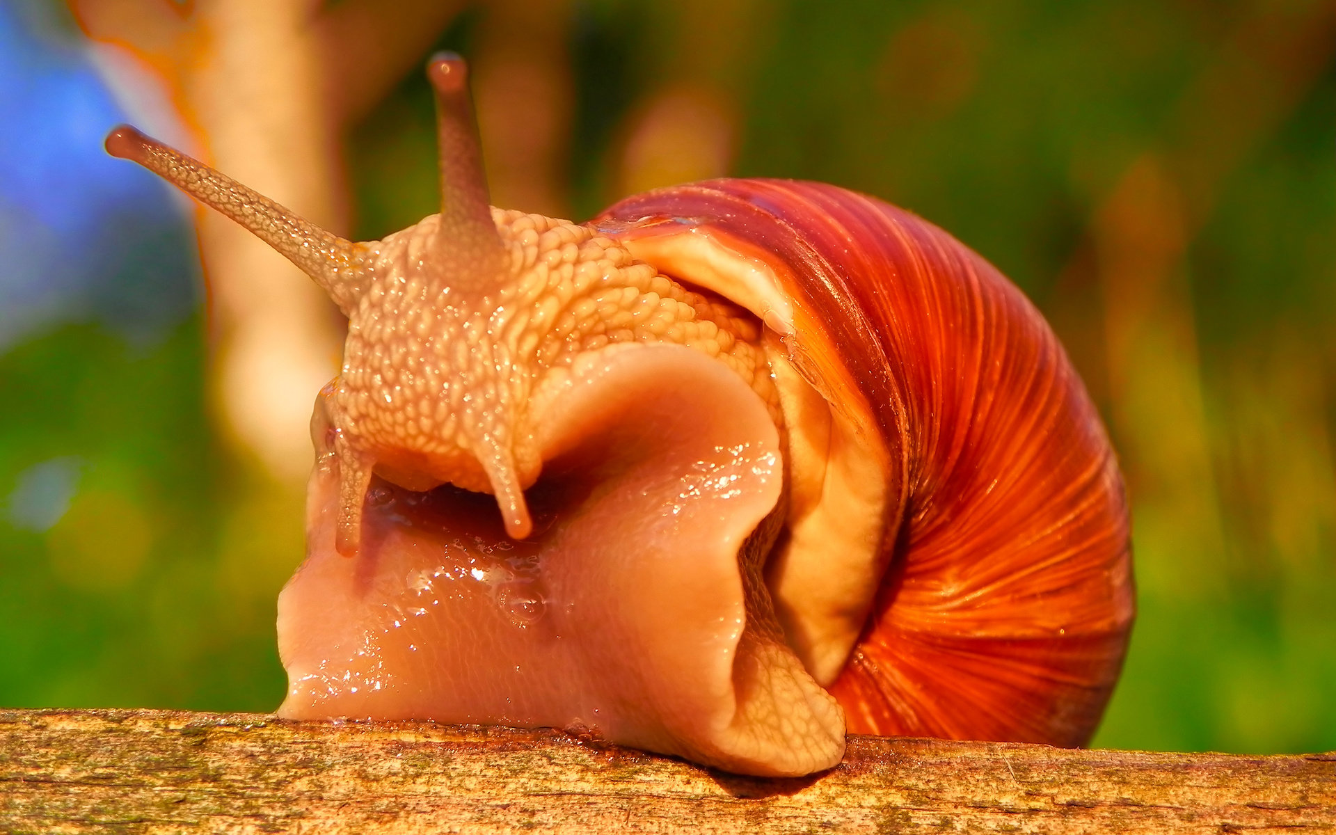 Download hd 1920x1200 Snail desktop background ID:198857 for free