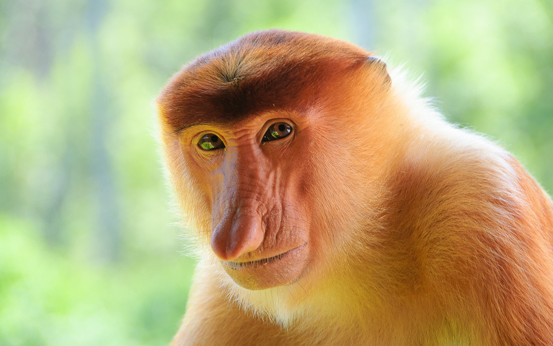 Free Monkey high quality background ID:128045 for hd 1920x1200 PC