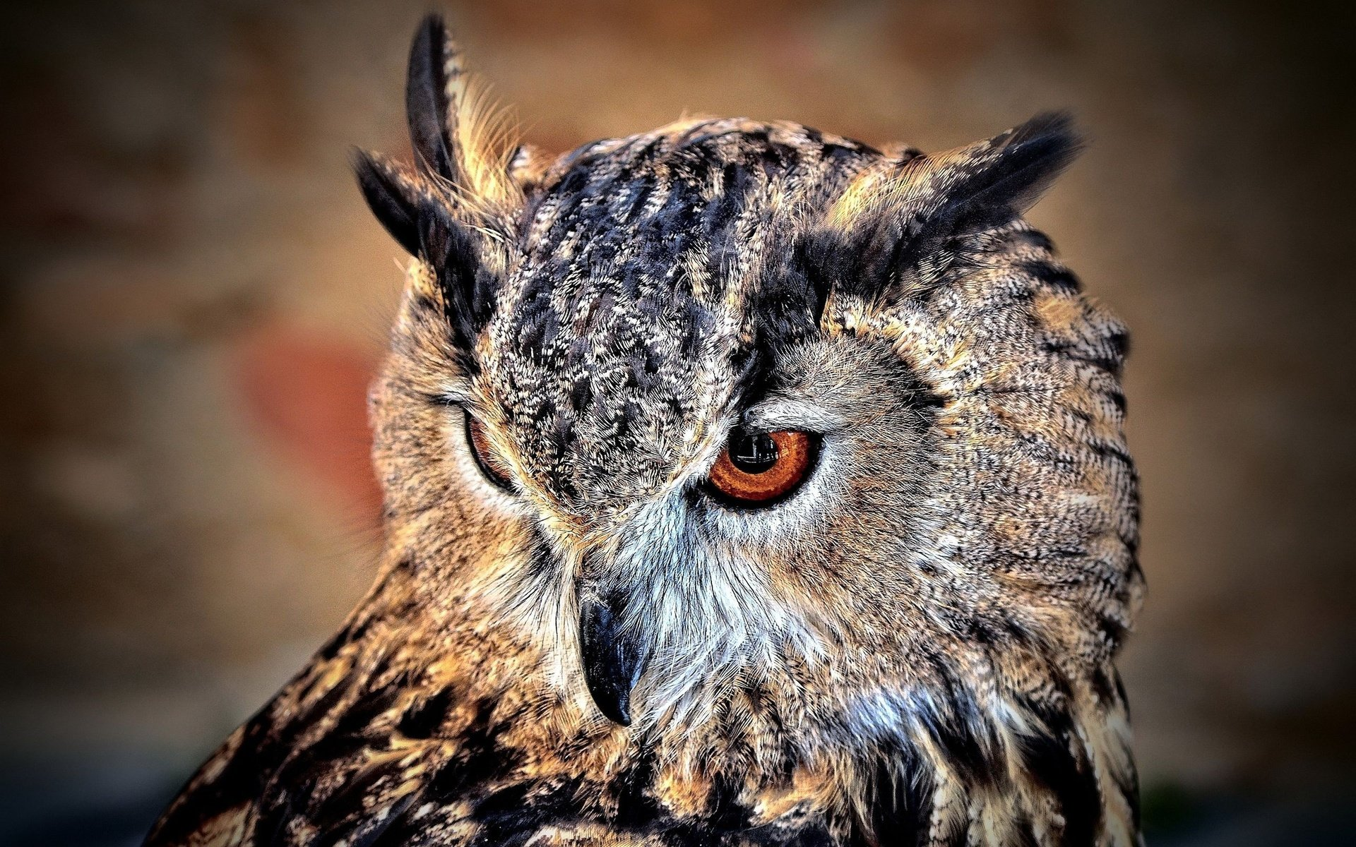 Download hd 1920x1200 Owl PC background ID:237143 for free