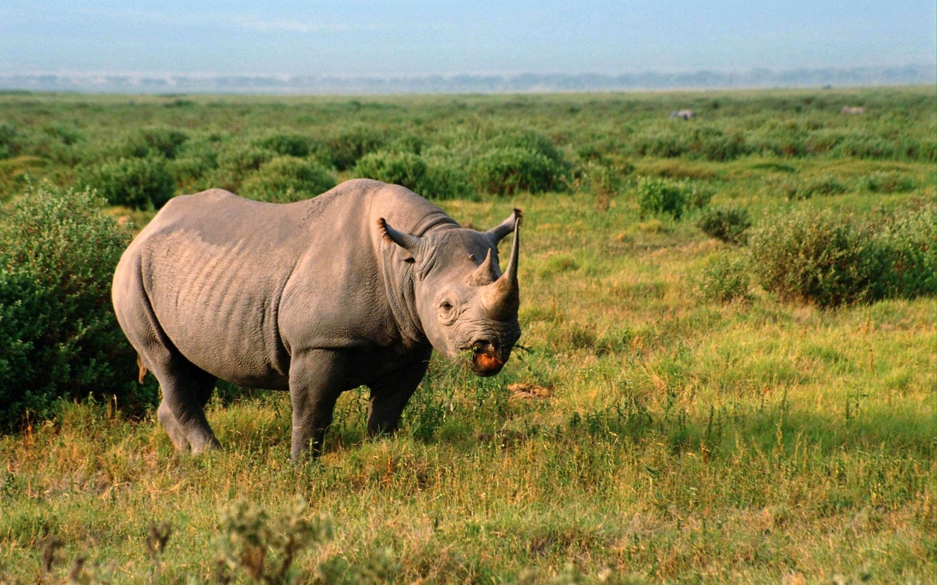 Best Rhino wallpaper ID:20153 for High Resolution hd 1920x1200 PC