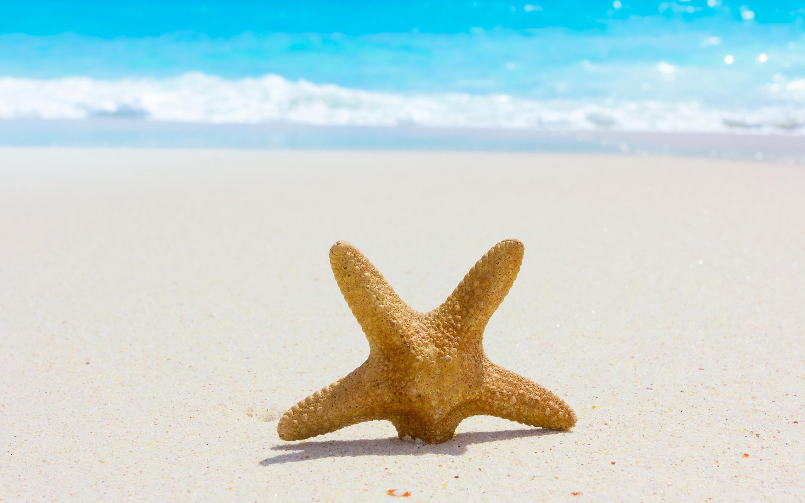 Download hd 2560x1600 Starfish PC background ID:29718 for free