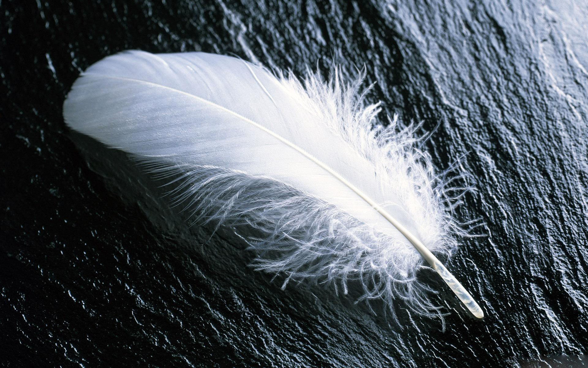 High resolution Feather hd 1920x1200 wallpaper ID:460547 for PC
