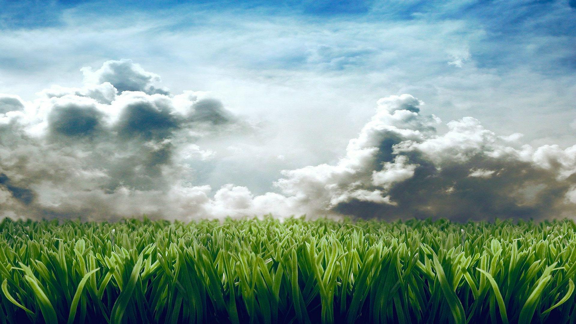 High Resolution Grass Full Hd 1080p Wallpaper Id 377855 For Desktop