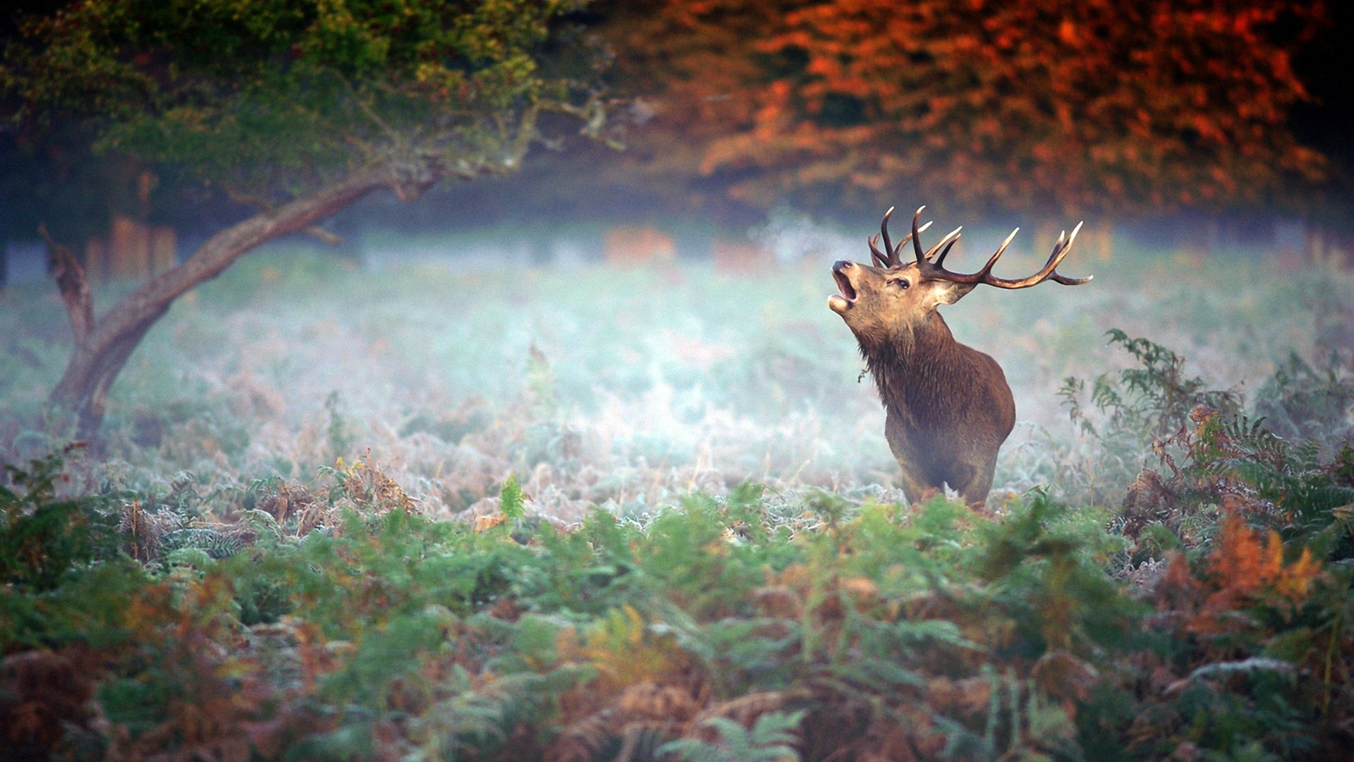 Free Deer high quality background ID:238707 for full hd 1080p desktop