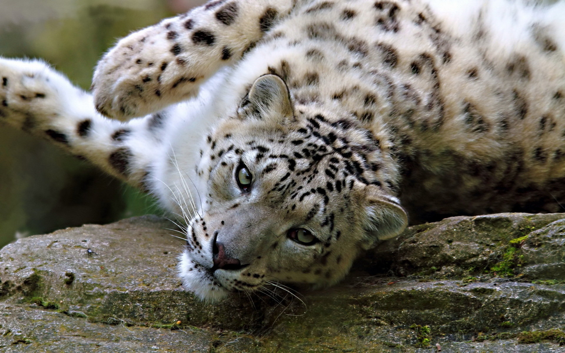 Download hd 1920x1200 Snow Leopard desktop wallpaper ID:34436 for free
