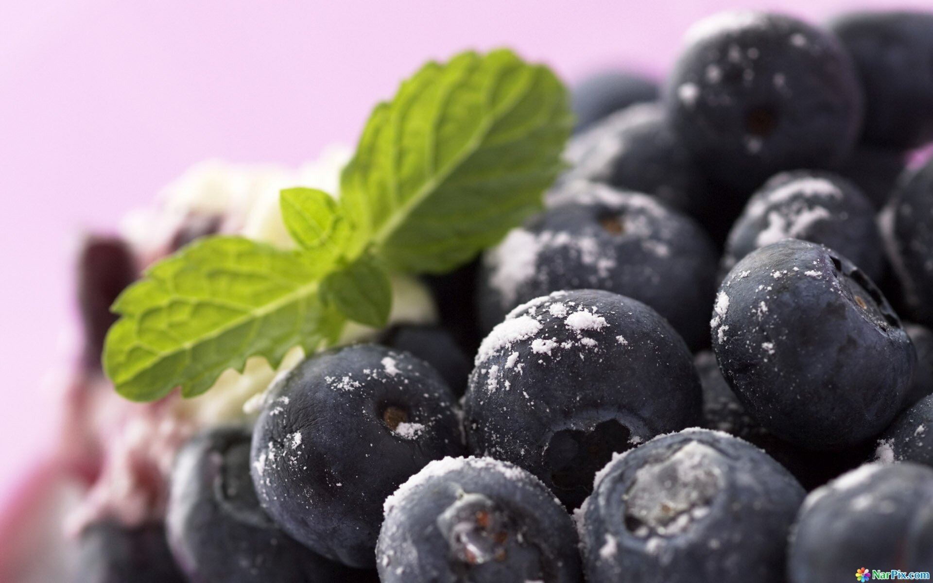 Free download Blueberry background ID:69021 hd 1920x1200 for desktop