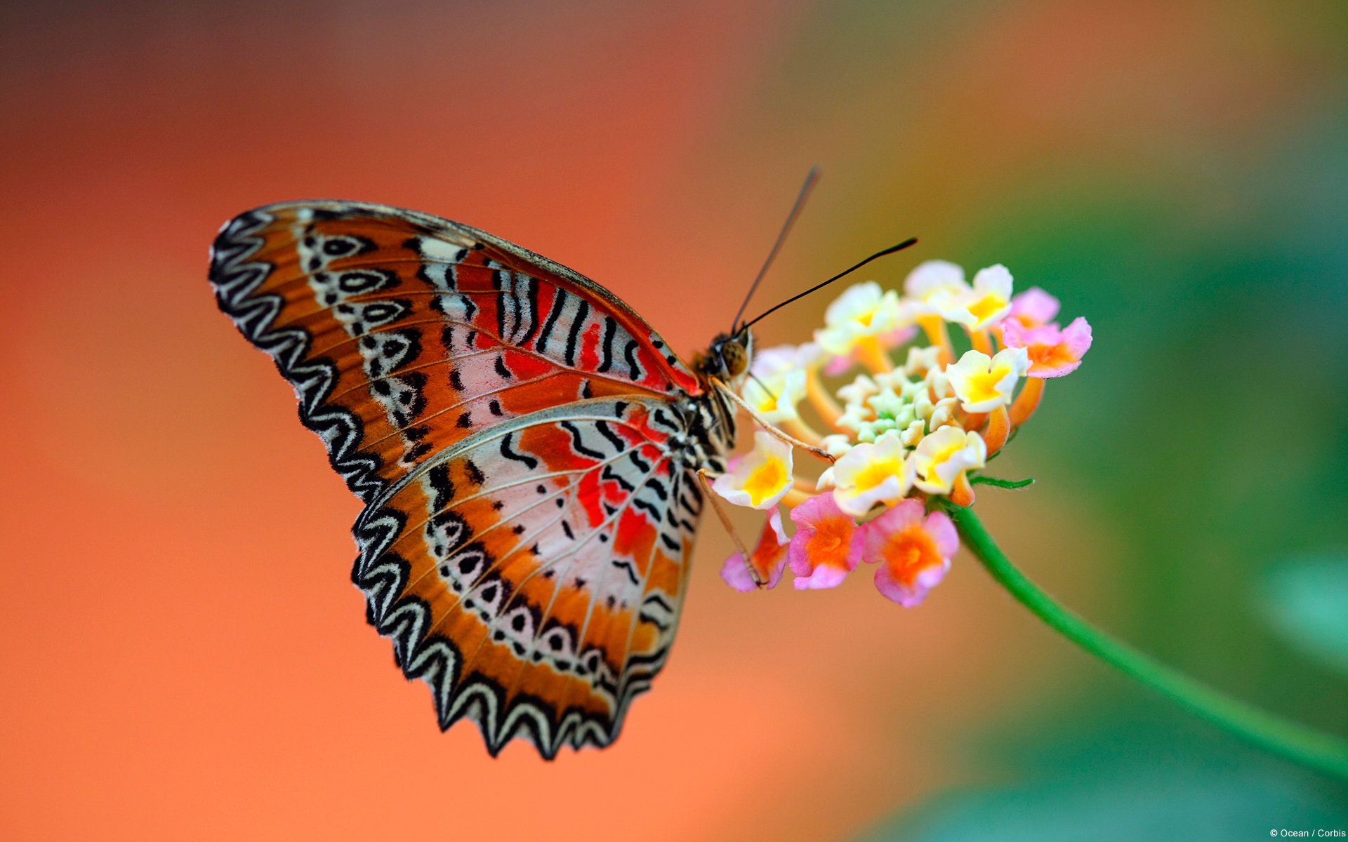 Free Butterfly high quality wallpaper ID:167514 for hd 1920x1200 PC