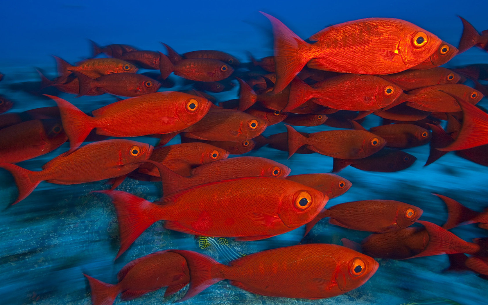 Awesome Fish free wallpaper ID:66444 for hd 1680x1050 PC