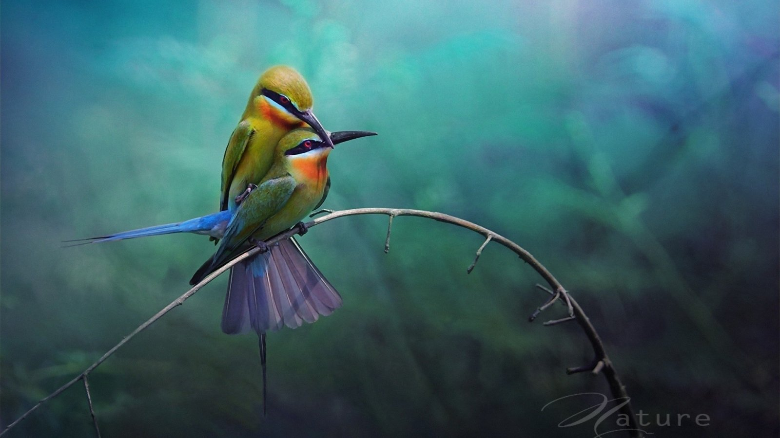 Free download Bird wallpaper ID:404521 hd 1600x900 for desktop