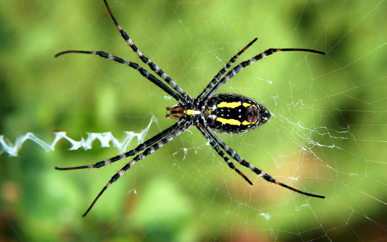 Awesome Spider free background ID:22201 for hd 1280x800 desktop