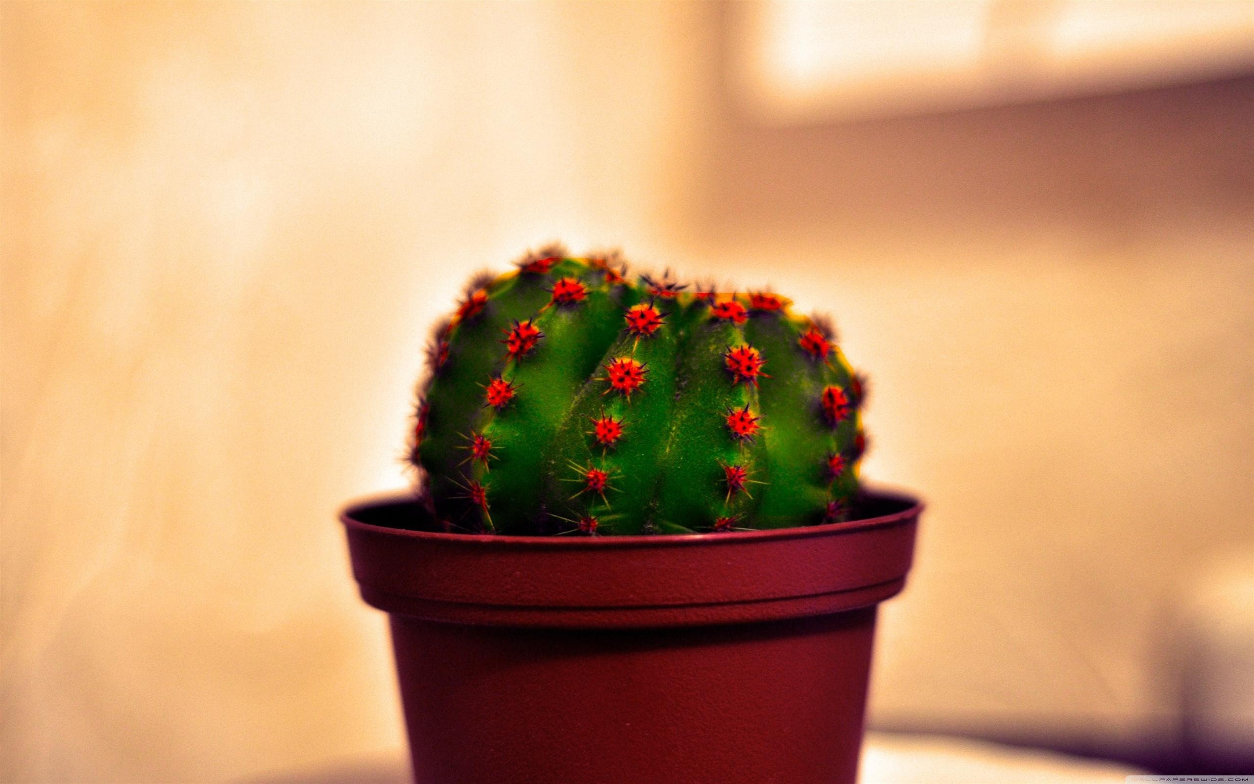 Cactus Wallpapers Hd For Desktop Backgrounds