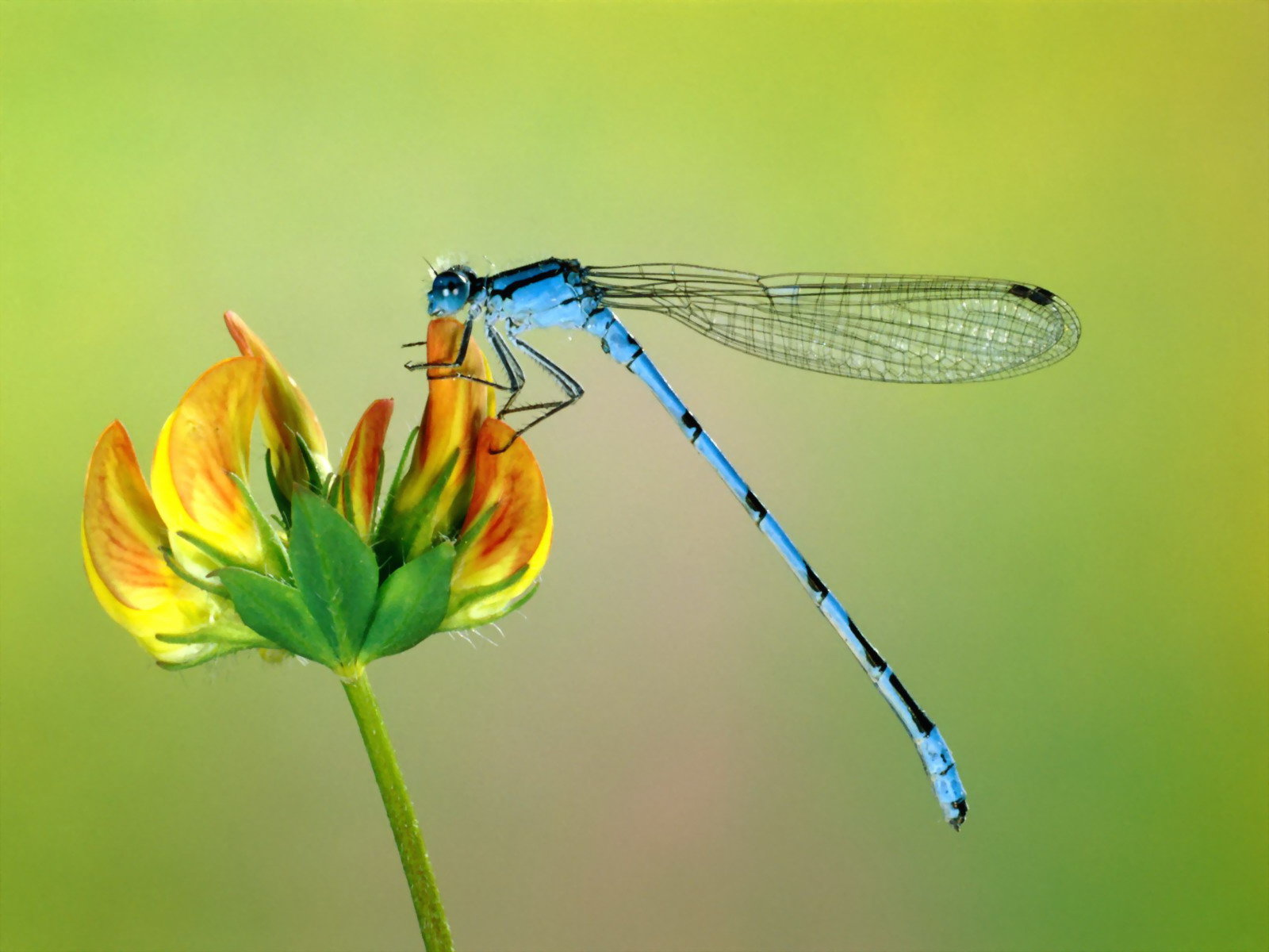 High resolution Dragonfly hd 1600x1200 wallpaper ID:467757 for PC