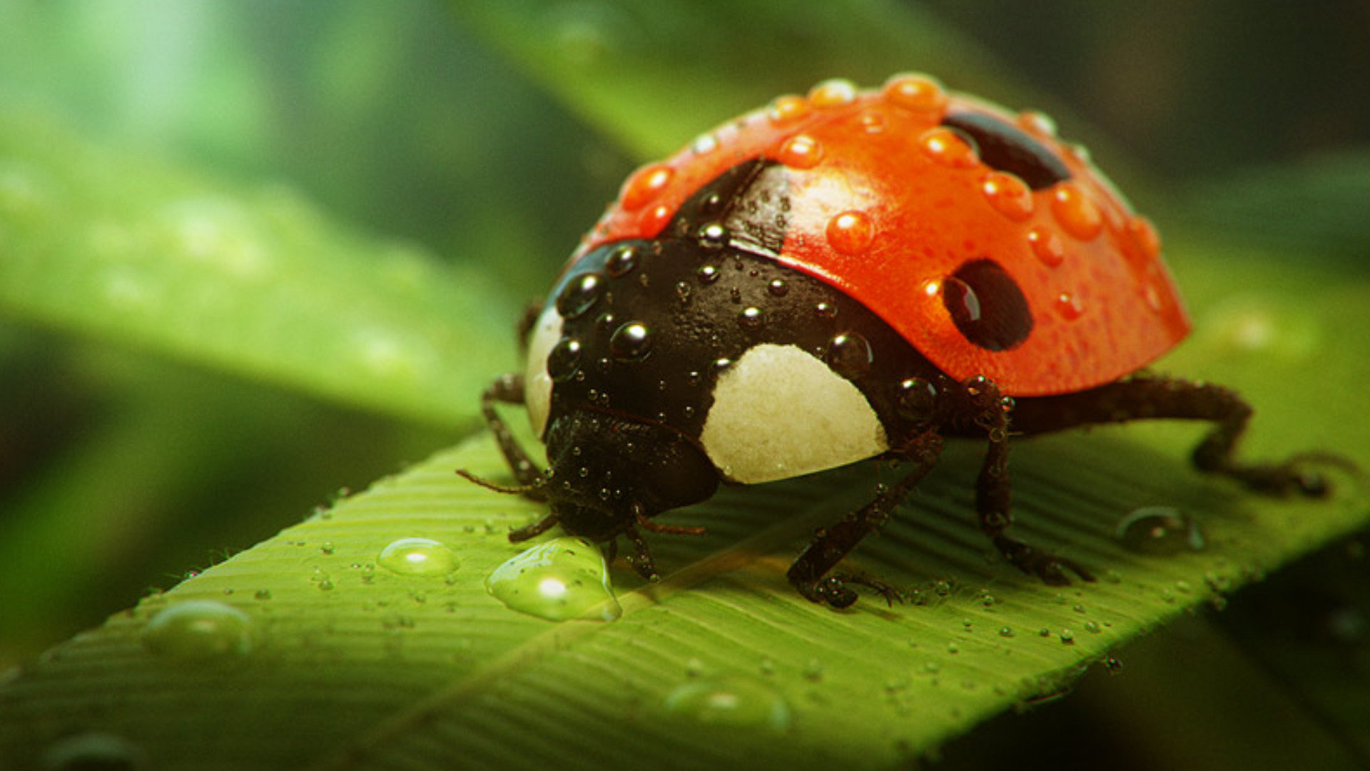 Free Ladybug high quality background ID:270460 for full hd computer