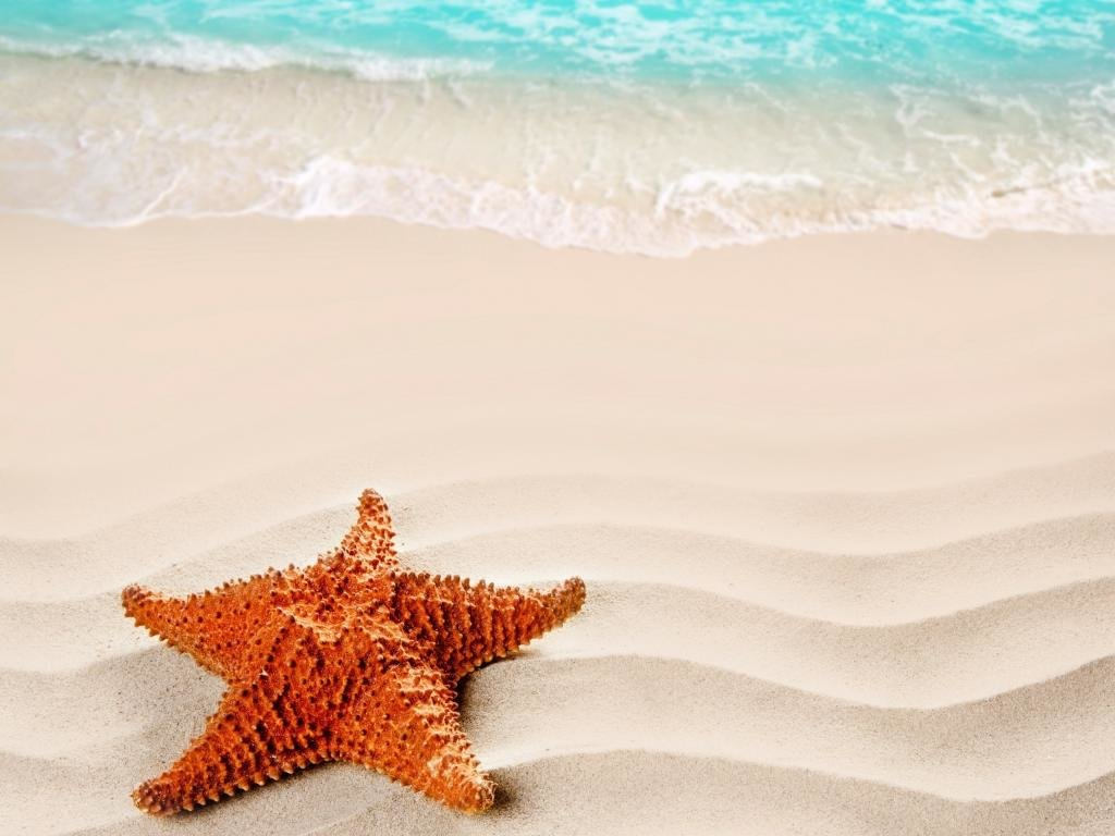 Download hd 1024x768 Starfish desktop background ID:29717 for free