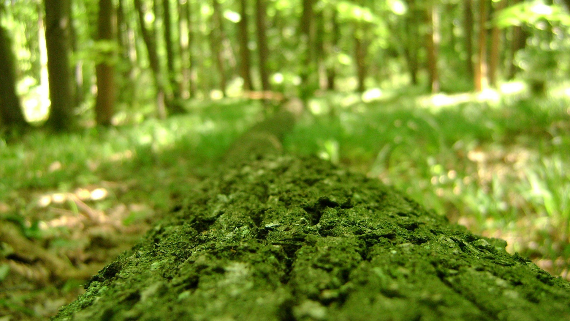 download hd 1920x1080 forest pc background id 473603 for free