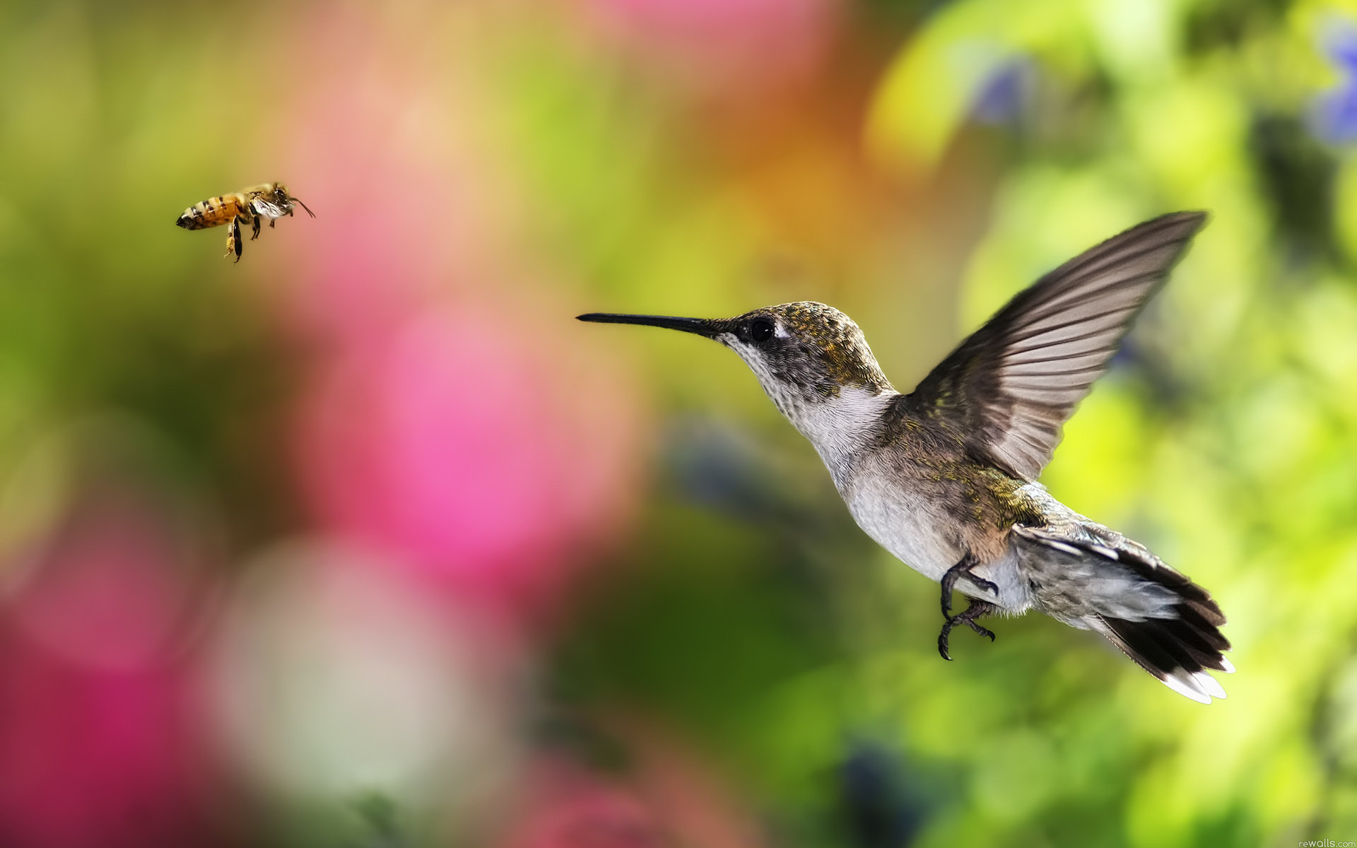 Awesome Hummingbird free wallpaper ID:215789 for hd 1920x1200 PC