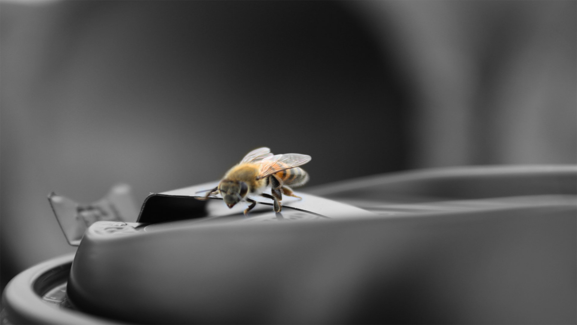 High resolution Bee full hd 1080p wallpaper ID:460746 for PC