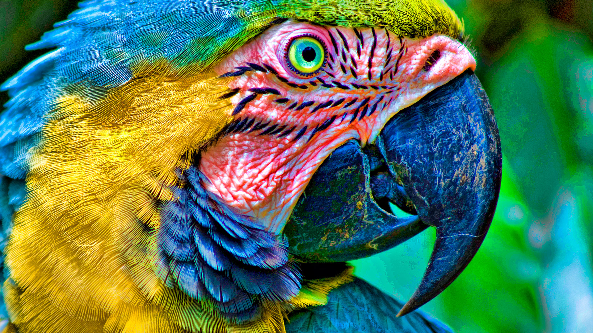 Free download Macaw background ID:46302 full hd 1080p for PC