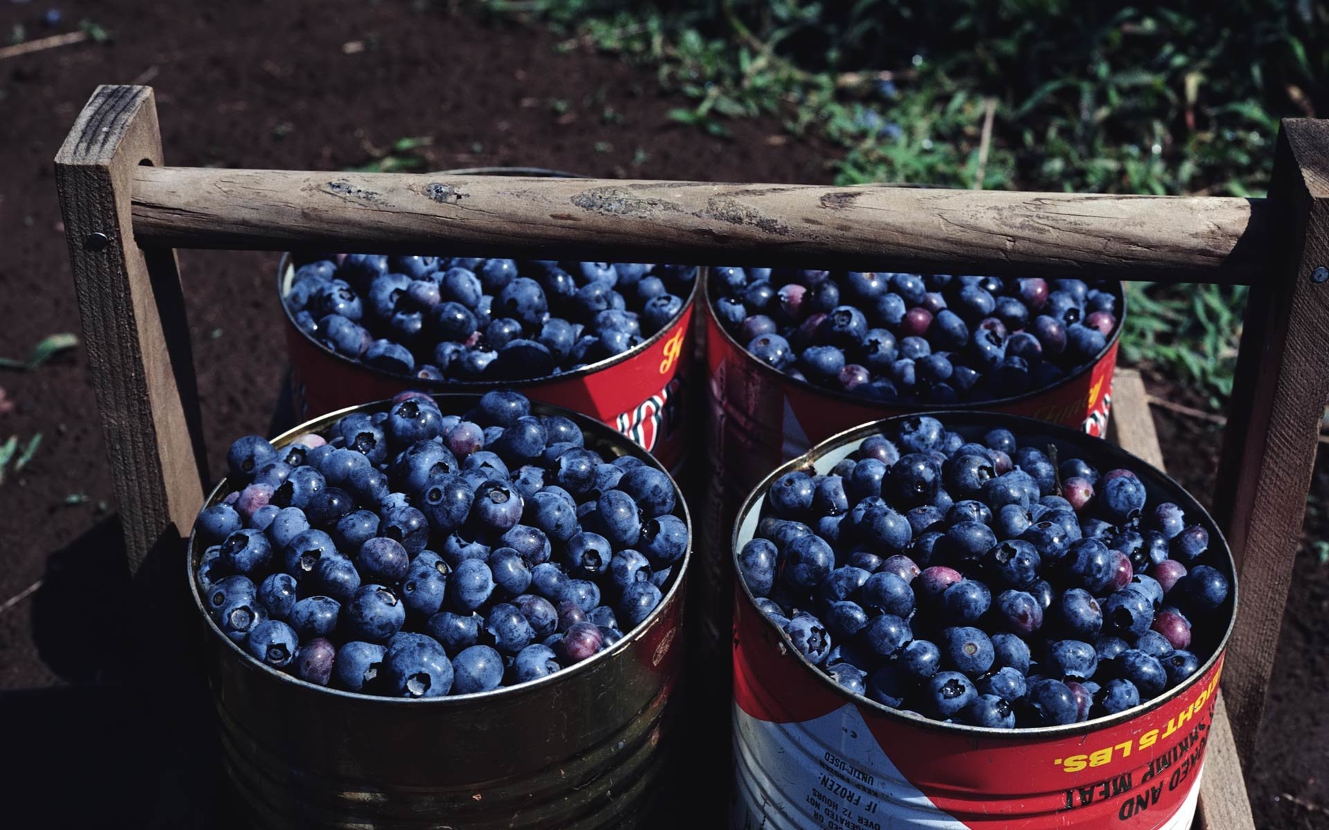Free Blueberry high quality wallpaper ID:68995 for hd 1920x1200 desktop