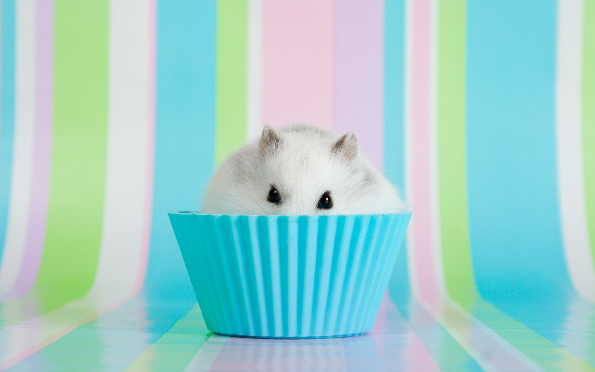 Free download Hamster background ID:234054 hd 1920x1200 for desktop