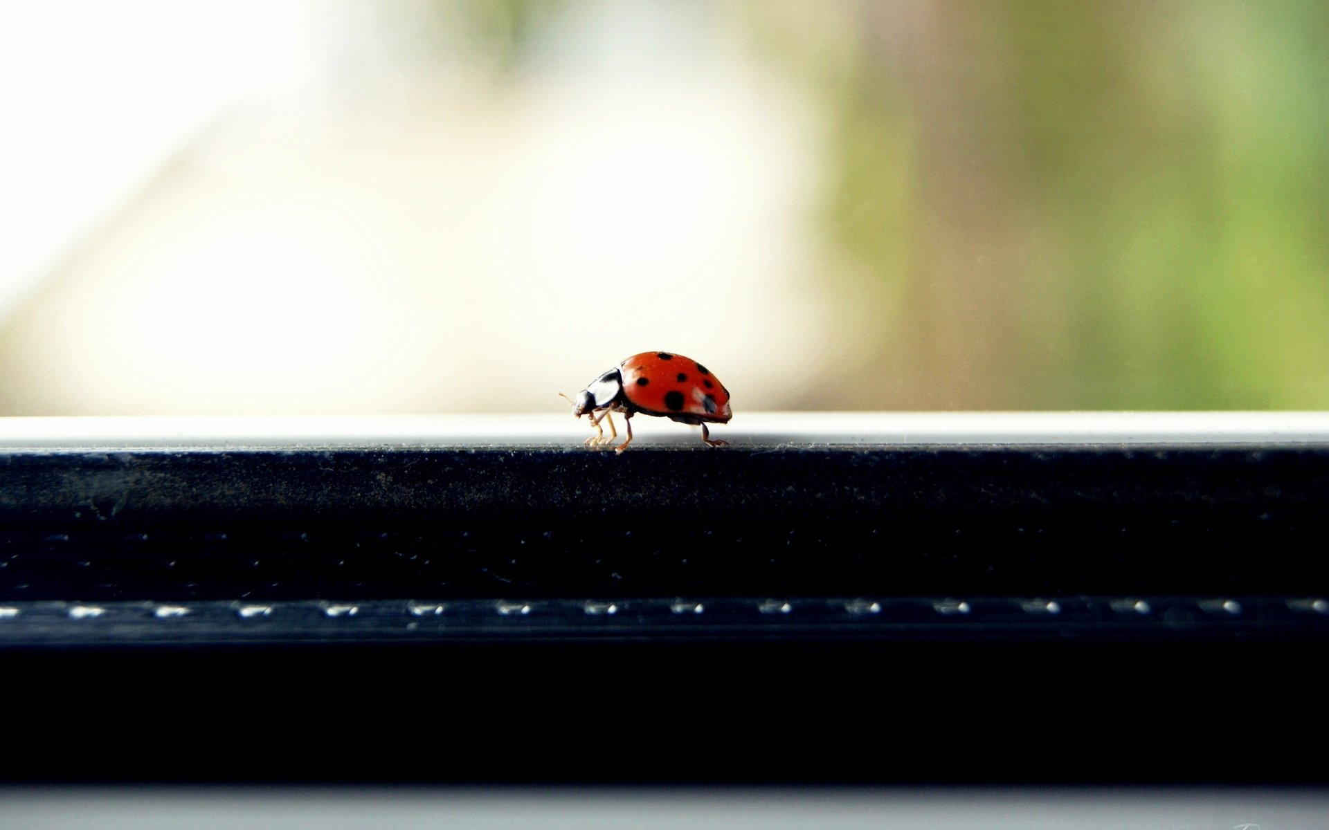 Free download Ladybug background ID:270567 hd 1920x1200 for PC